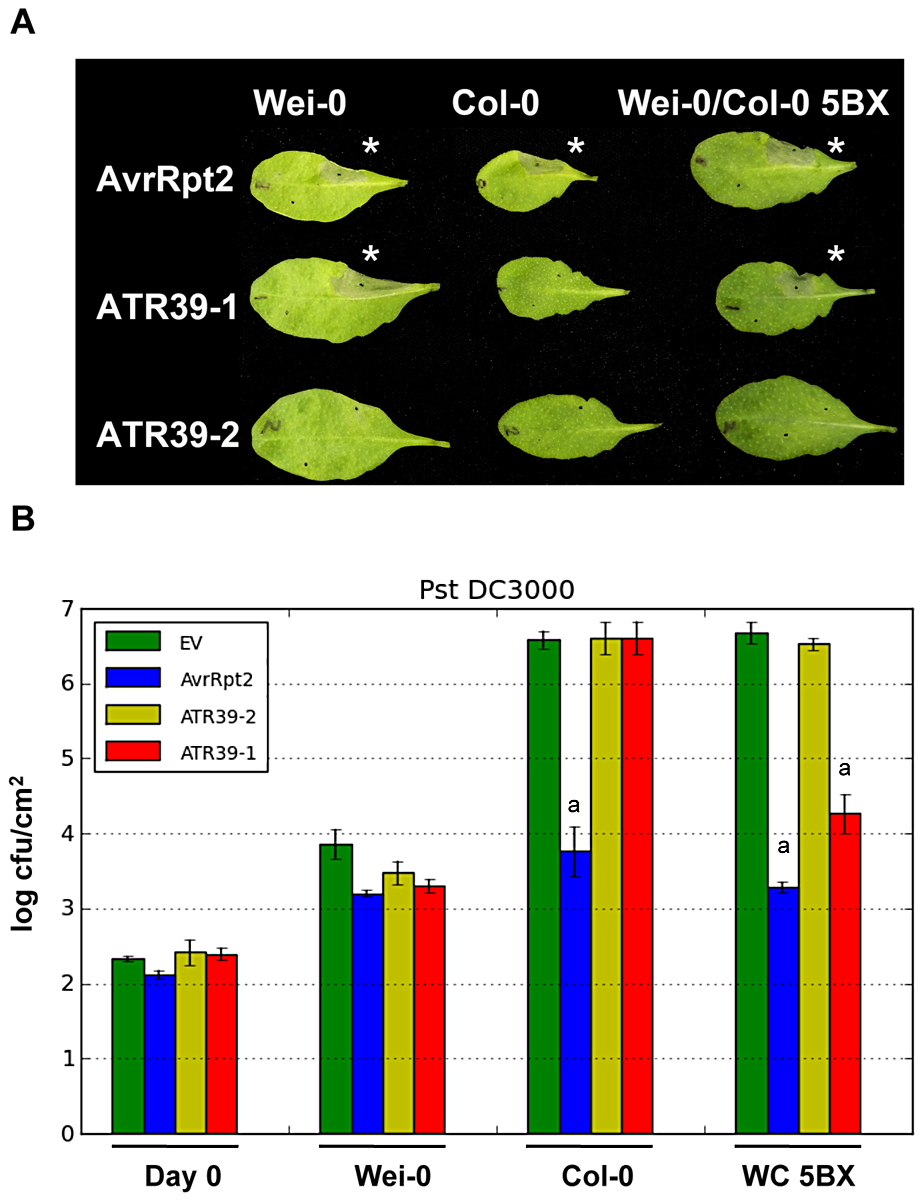 <i>Hpa</i> effector ATR39-1 is recognized by <i>A. thaliana</i> ecotype Wei-0.