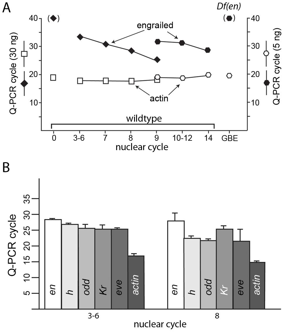Q–PCR analysis detects transcription in pre-blastoderm embryos.