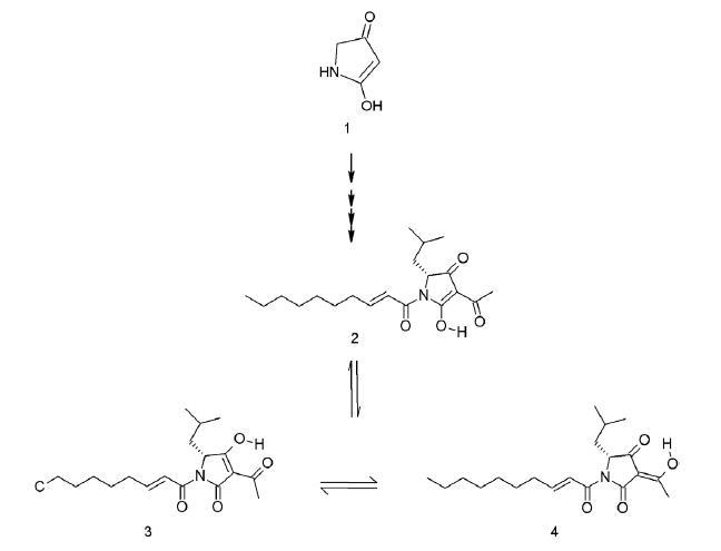Reutericyklín vzniká z kyseliny tetrámovej (1), presný mechanizmus biosyntézy nie je dosiaľ známy. Reutericyklín sa v roztokoch vyskytuje v troch keto-enol tautomérnych formách (2, 3, 4) <sup>27)</sup>