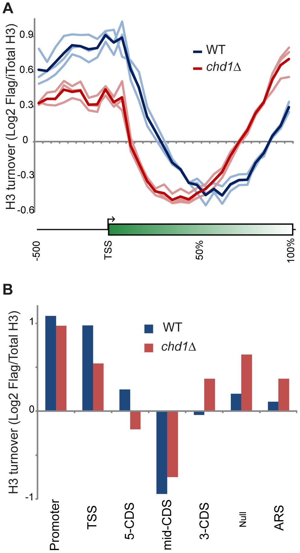 Chd1 plays a key role in H3 replacement dynamics at gene ends.