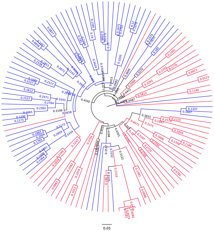 UPGMA dendogram based on Bray-Curtis similarity.