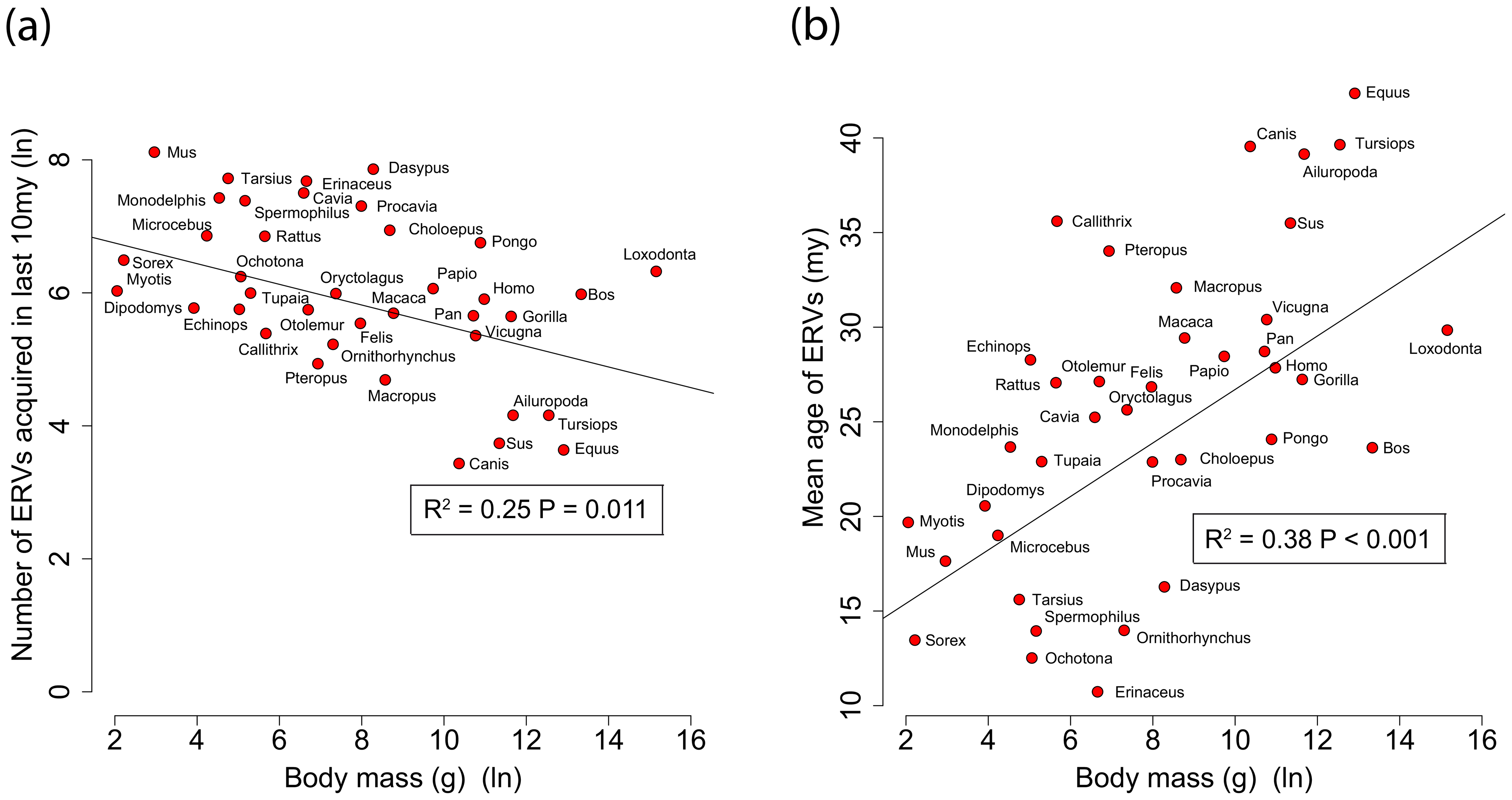 (a) Correlation between ERV count and body mass for the number of ERV integrations acquired over the last 10 my.