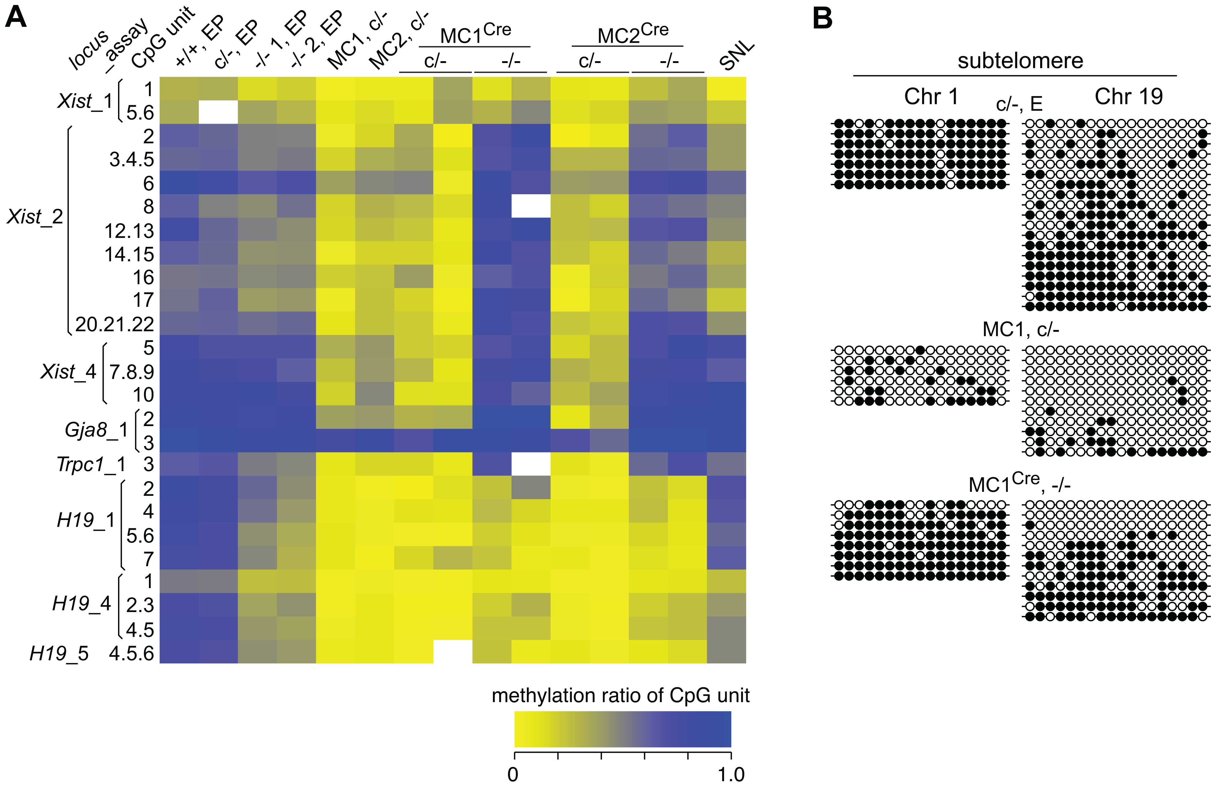 DNA methylation analysis of single copy sequences.