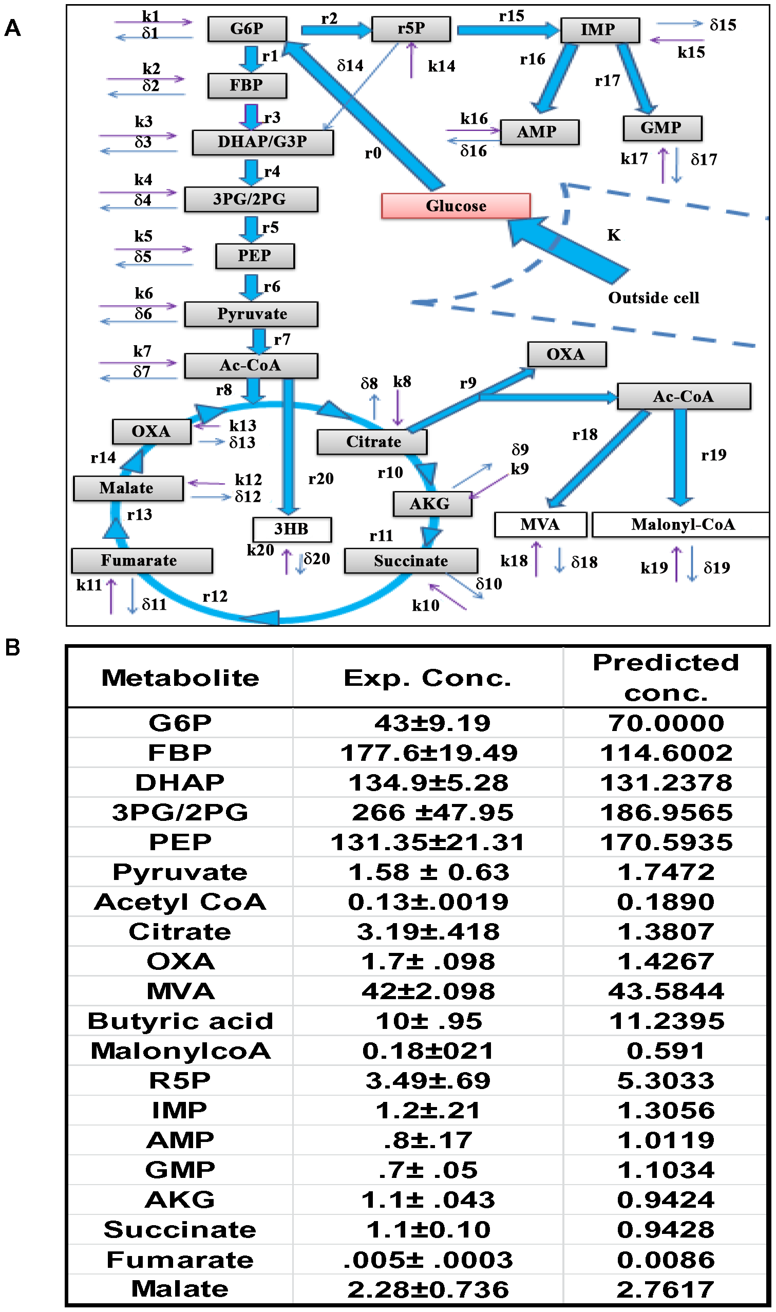 The CCM pathways captured by the ODE model.