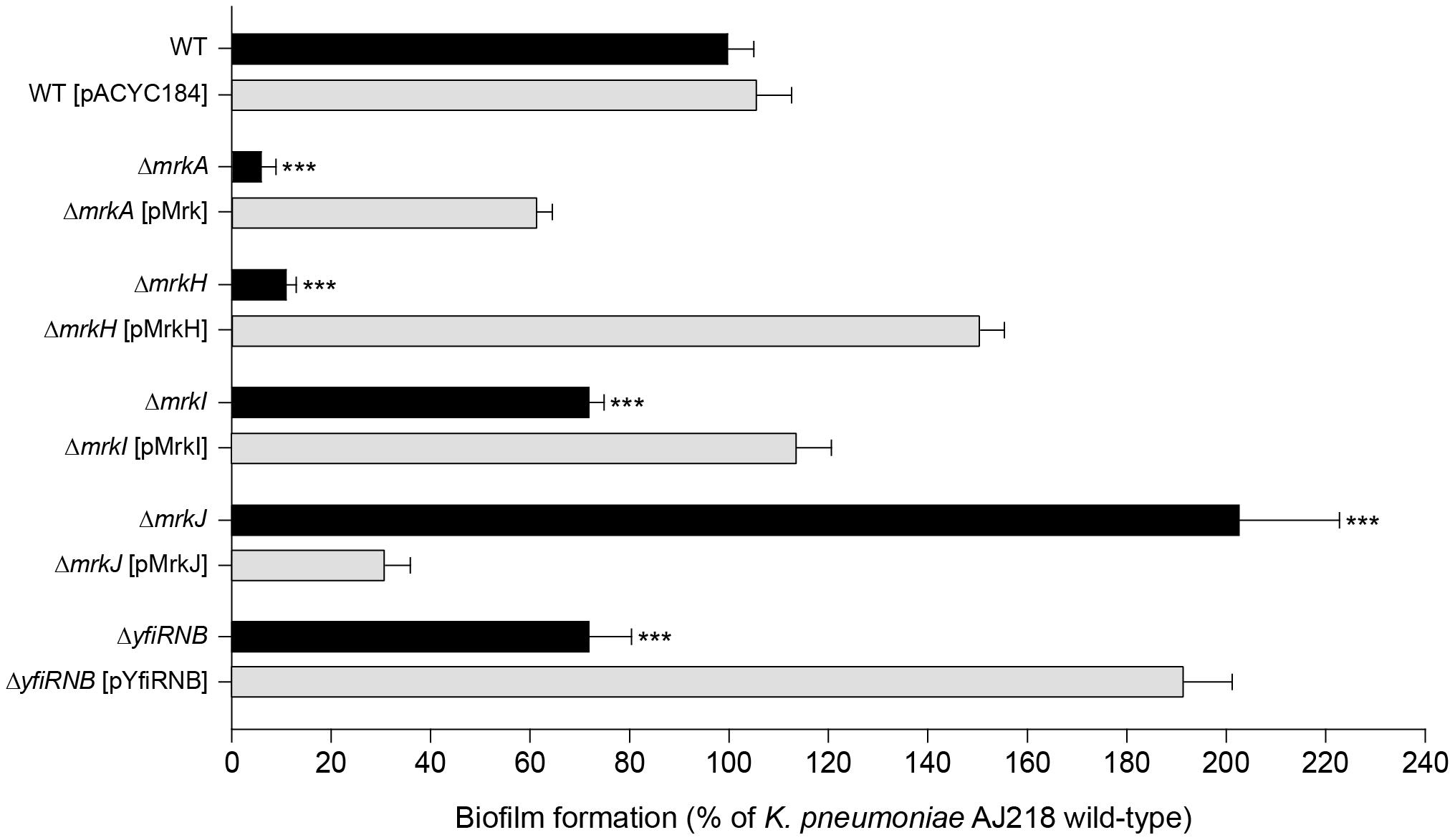 Biofilm formation by <i>K. pneumoniae</i> AJ218.