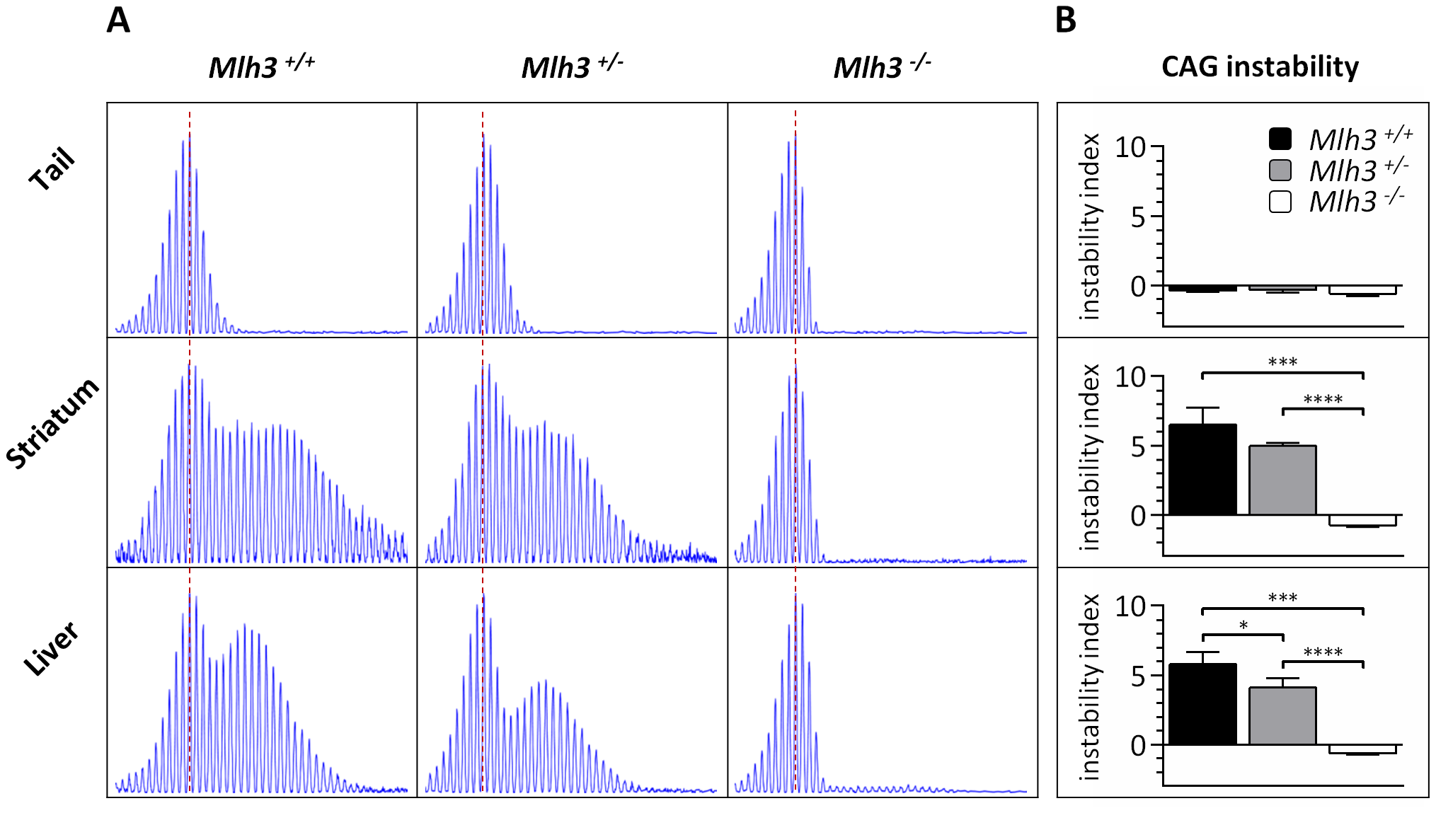 <i>Mlh3</i> is required for striatal and liver <i>HTT</i> CAG repeat instability in B6.<i>Hdh<sup>Q111/+</sup></i> mice.