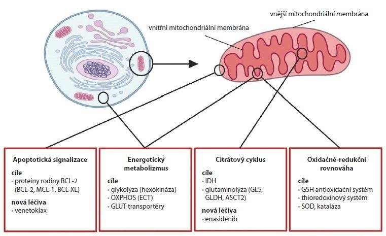 Přehled strategií pro cílení mitochondriálních procesů v terapii nádorů.