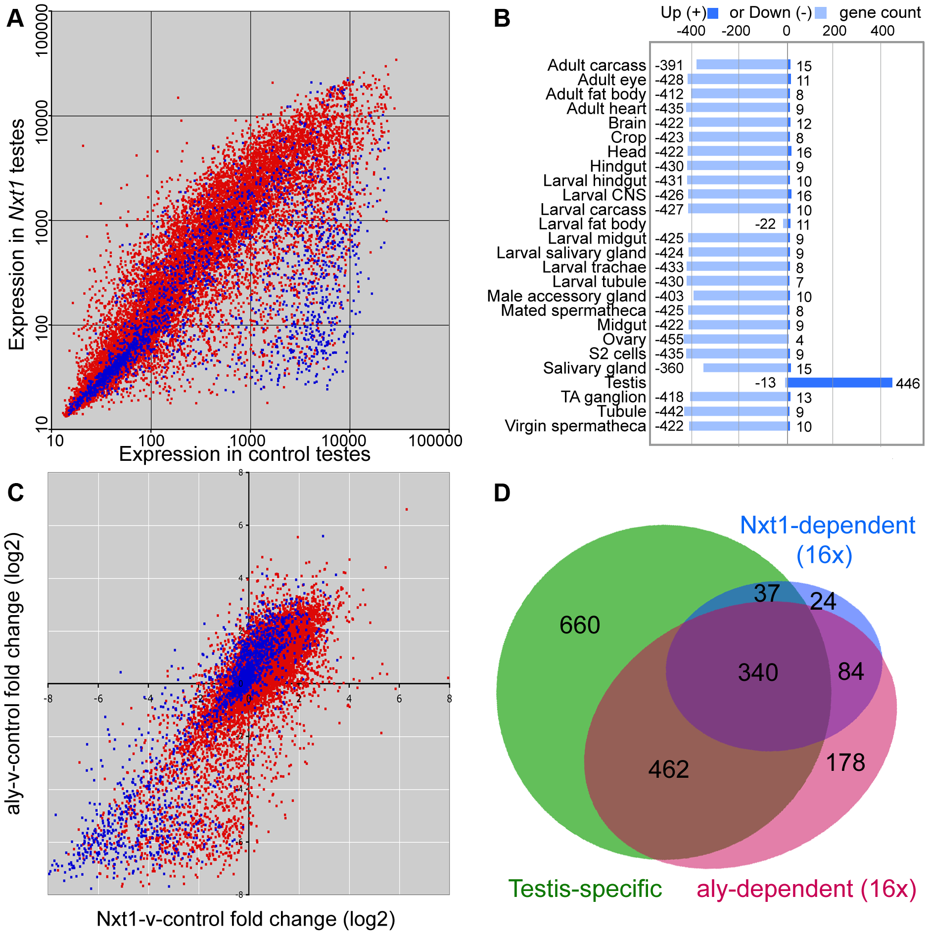 Microarray analysis of <i>Nxt1</i>-dependent gene expression in testes.