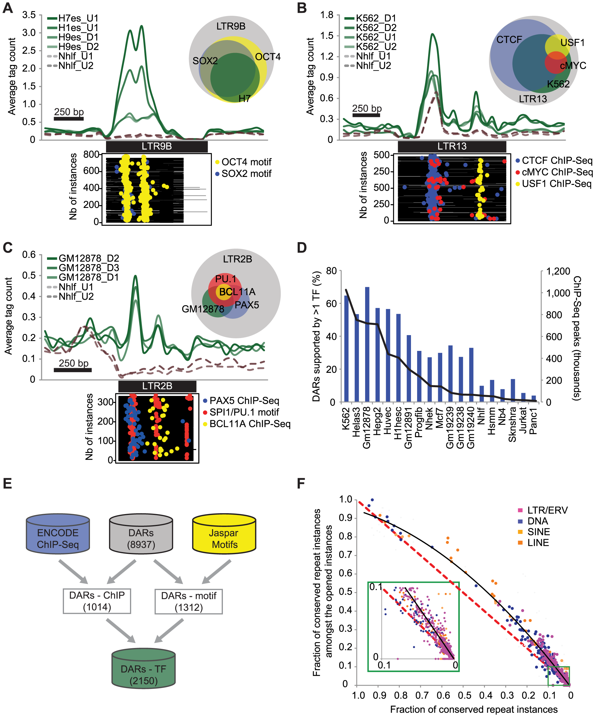 DARs are enriched for binding motifs, occupied by TFs, and show sequence conservation.