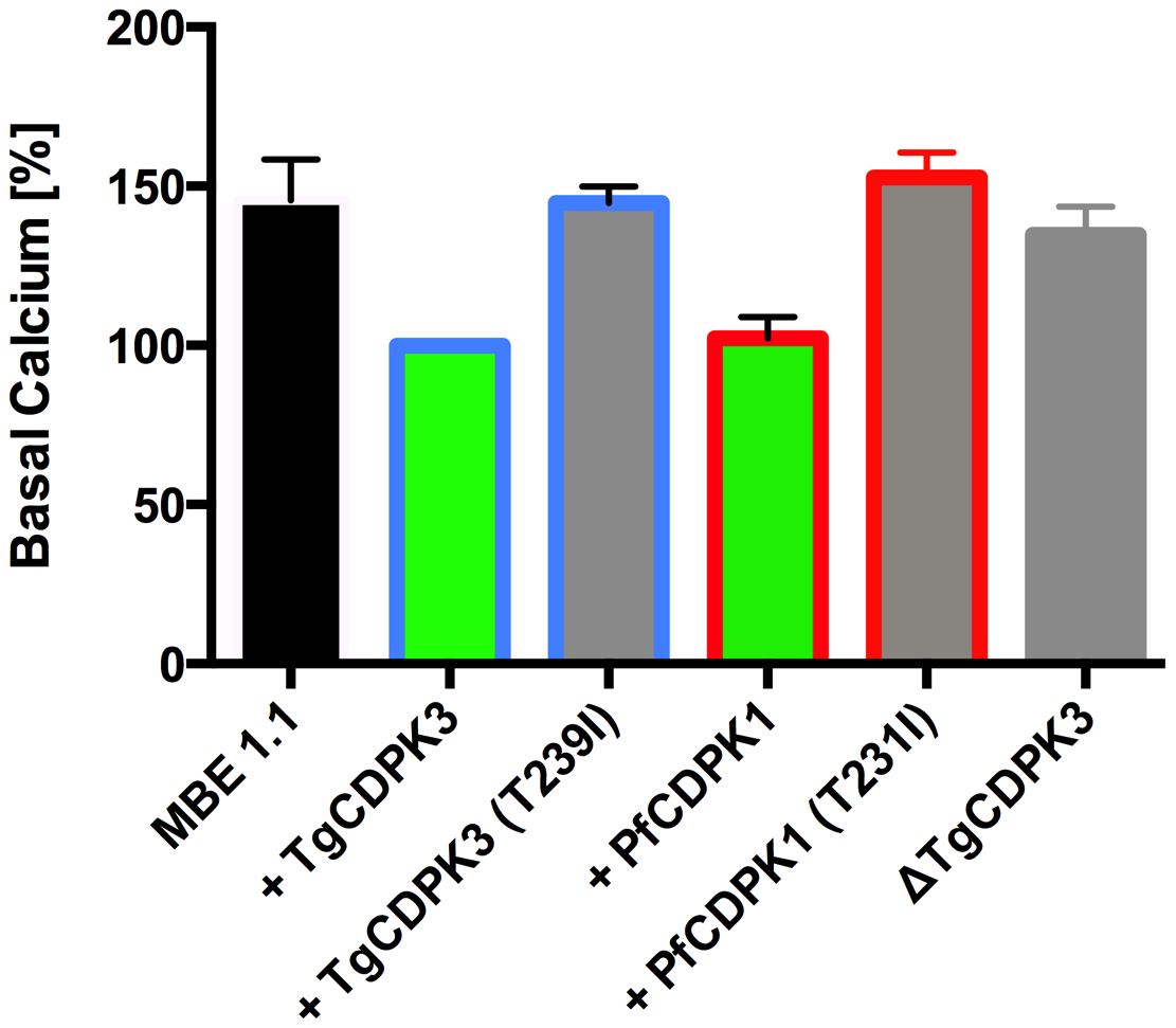 Absence of TgCDPK3 results in elevation of resting Ca<sup>2+</sup> levels in <i>T. gondii</i> tachyzoites.