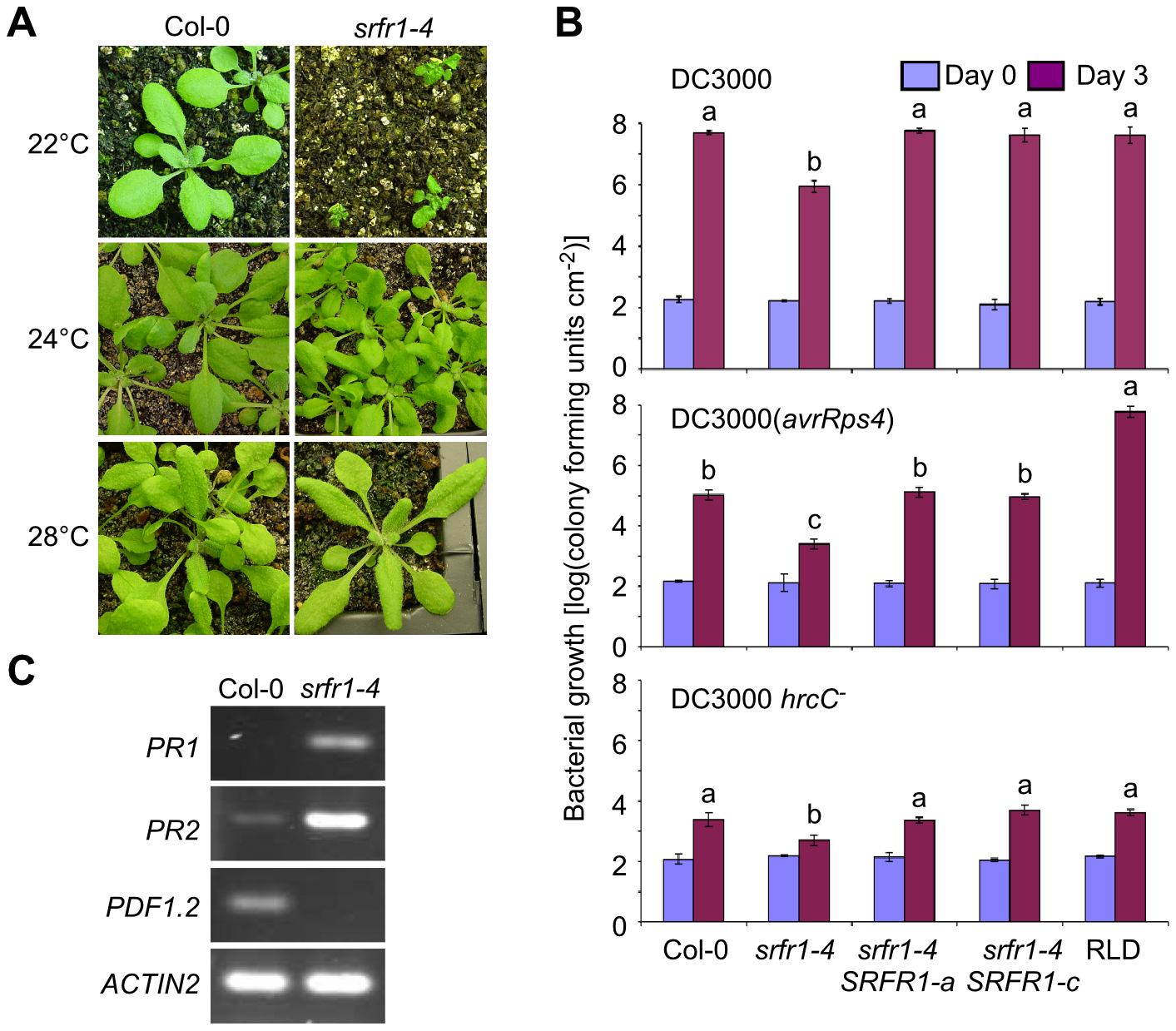 The growth phenotype of <i>srfr1-4</i> is temperature-dependent and accompanied by constitutive activation of defenses.