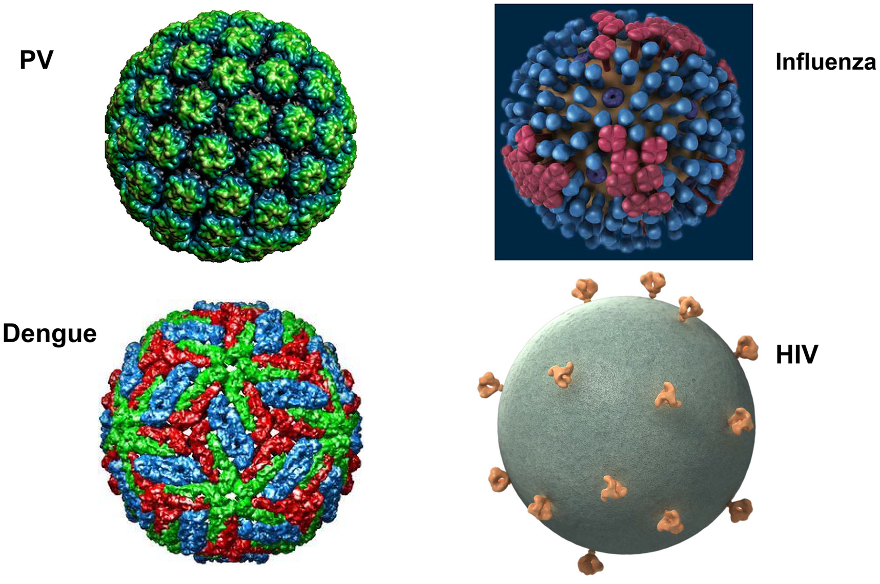 What's different about HIV virions?