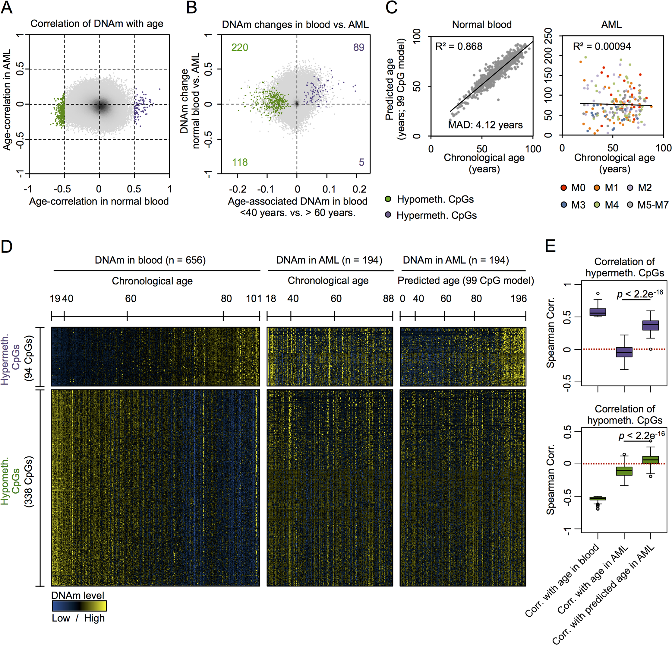 CpGs with age-associated hypermethylation are coherently modified in AML.
