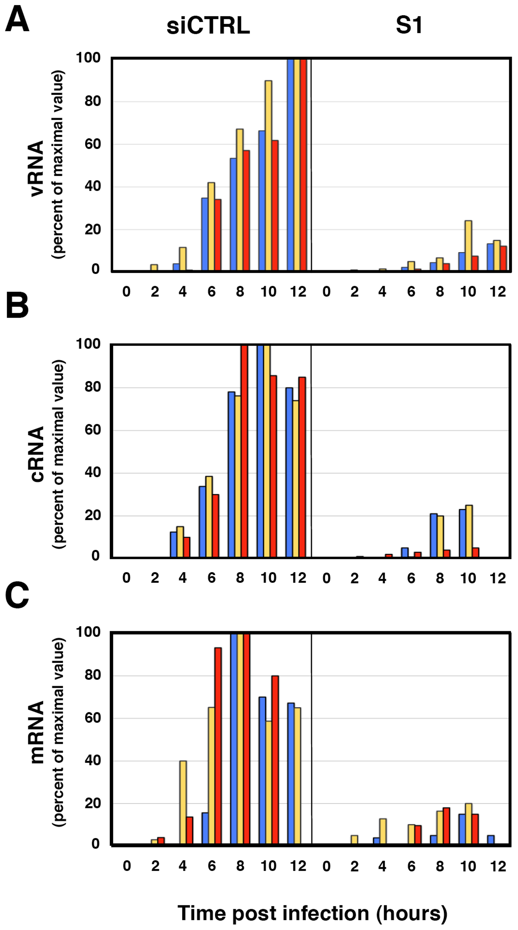 Accumulation of positive- and negative-polarity RNAs during the influenza virus infection of SFPQ/PSF-silenced cells.