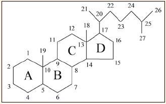 Označování cyklů a číslování atomů (cholestan).