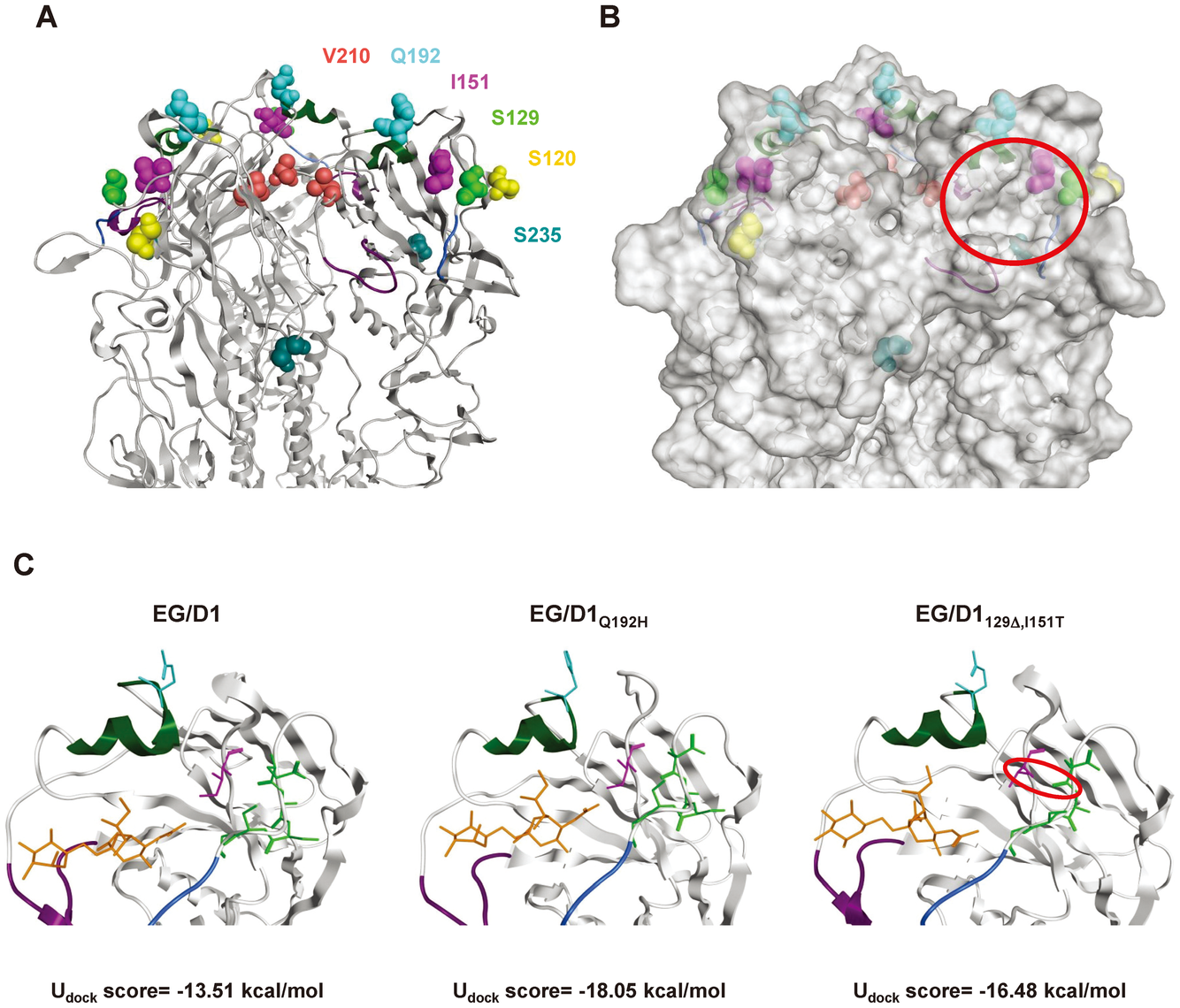 Analysis of receptor docking modes of EG/D1 HA and HA mutants.
