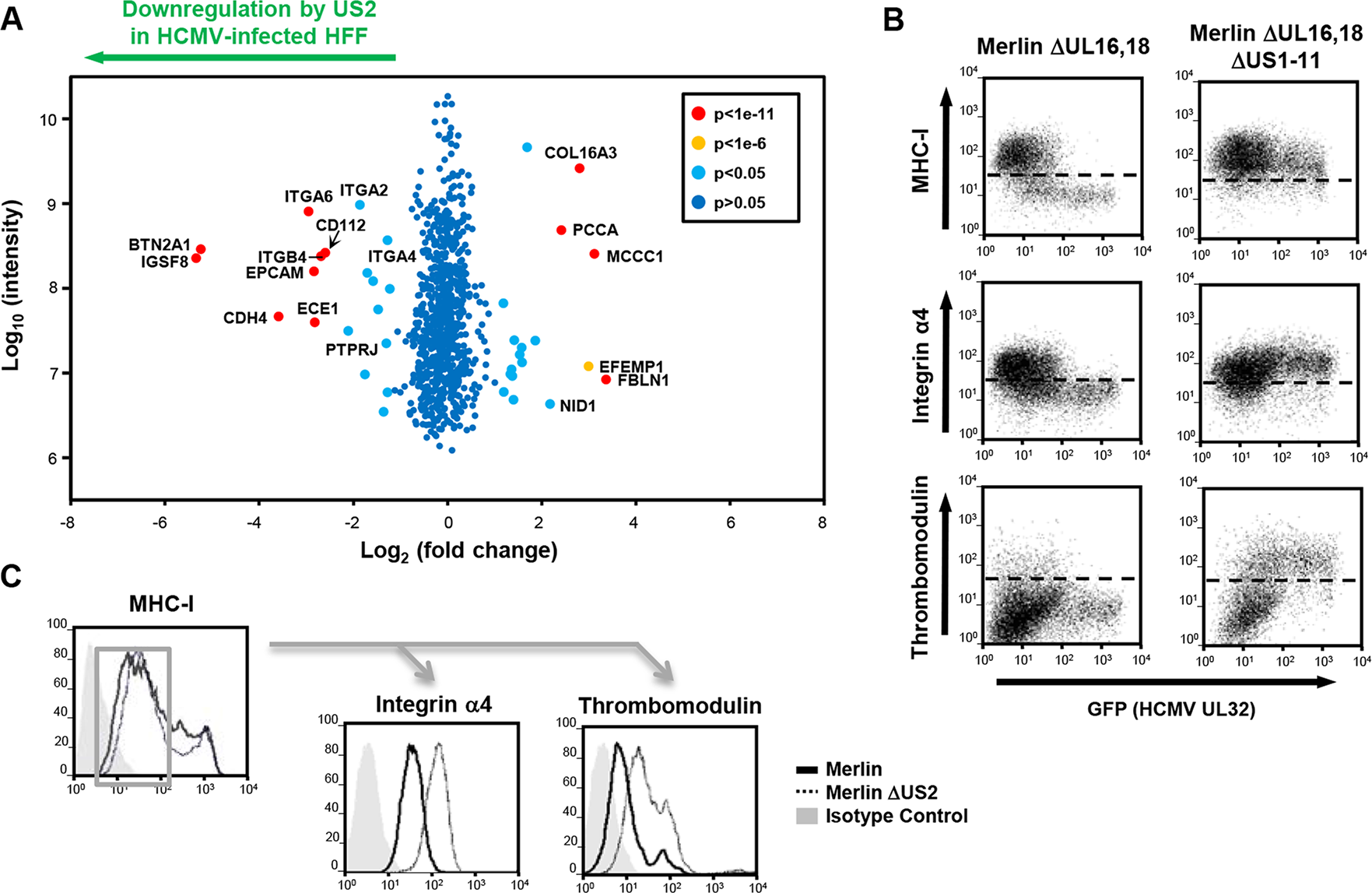 PMP comparing wild-type and US2-deficient HCMV shows a requirement for US2 in the downregulation of cell surface targets.