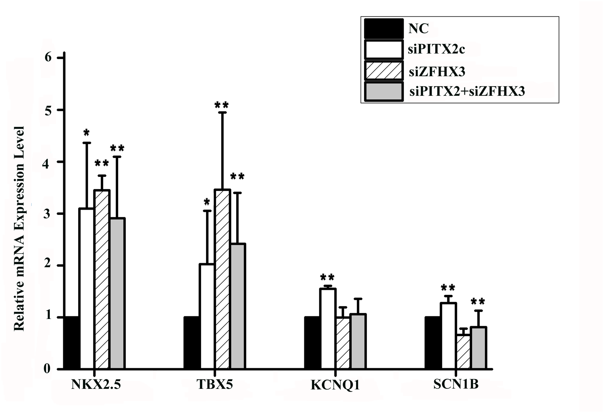 <i>PITX2c</i> and <i>ZFHX3</i> regulate expression of <i>NKX2</i>.<i>5</i>, <i>TBX5</i>, <i>KCNQ1</i> and <i>SCN1B</i>.
