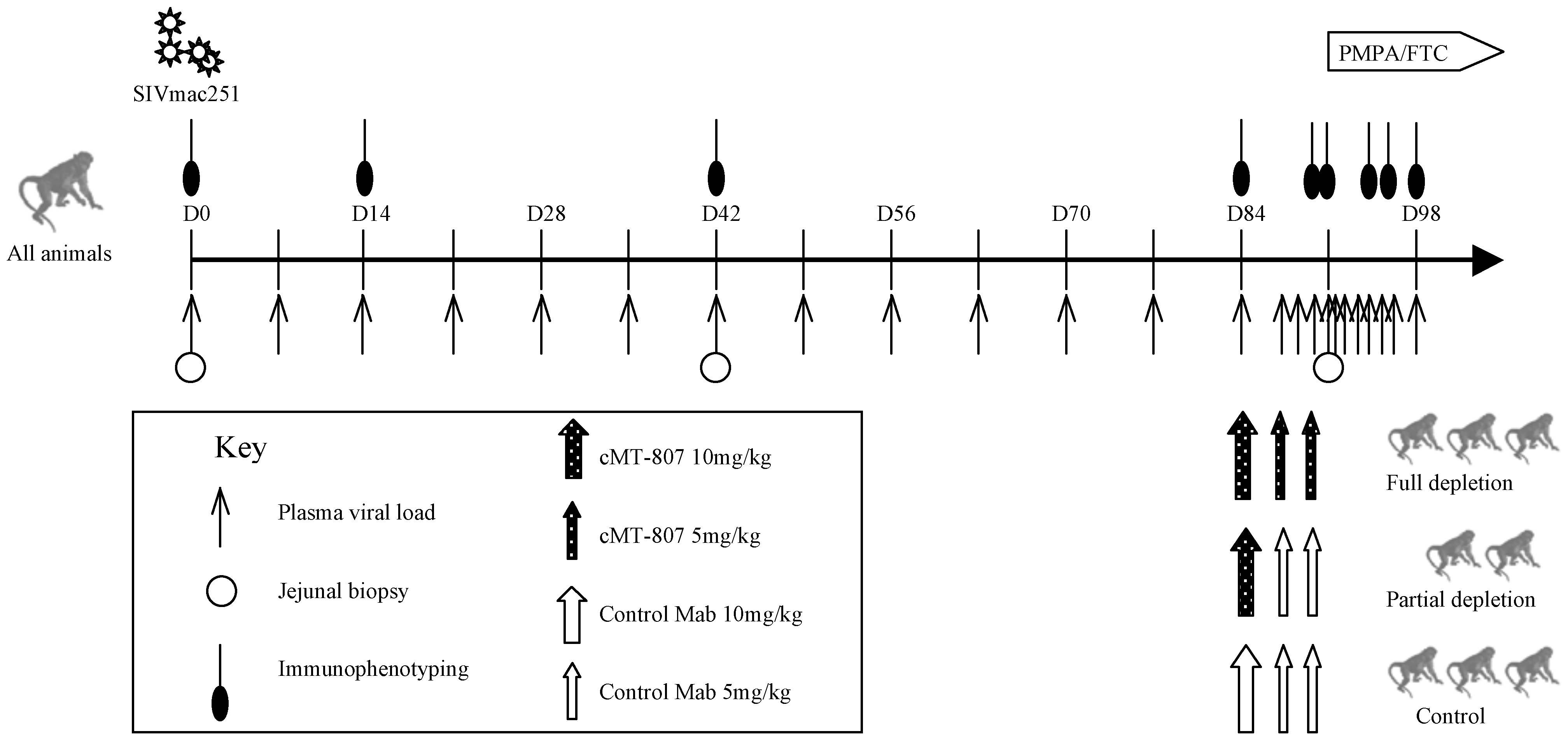 Timeline of experiments.
