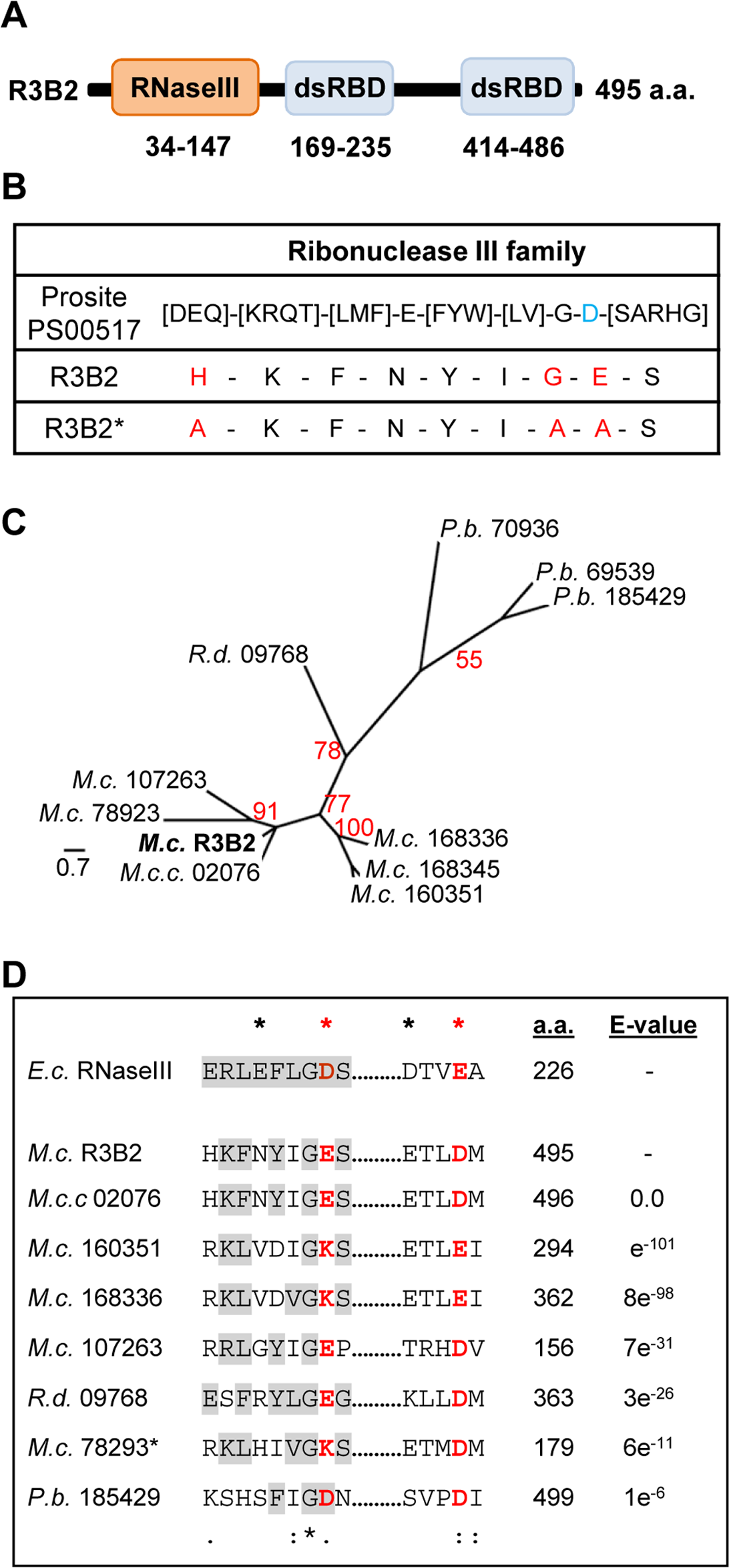 Domain structure and conserved residues of the <i>M</i>. <i>circinelloides</i> RNase III R3B2.