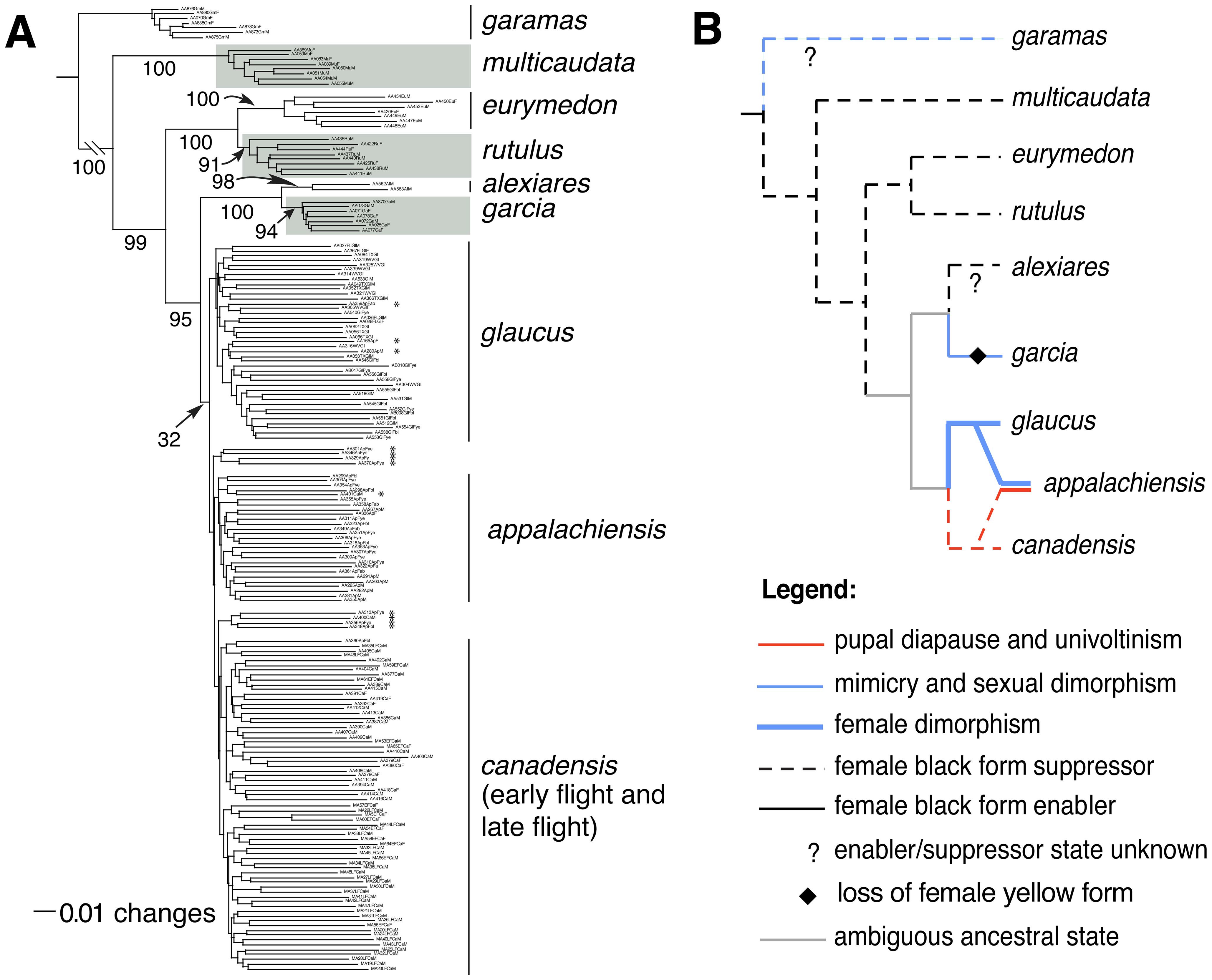 Phylogenetic relationships and character evolution among tiger swallowtails.