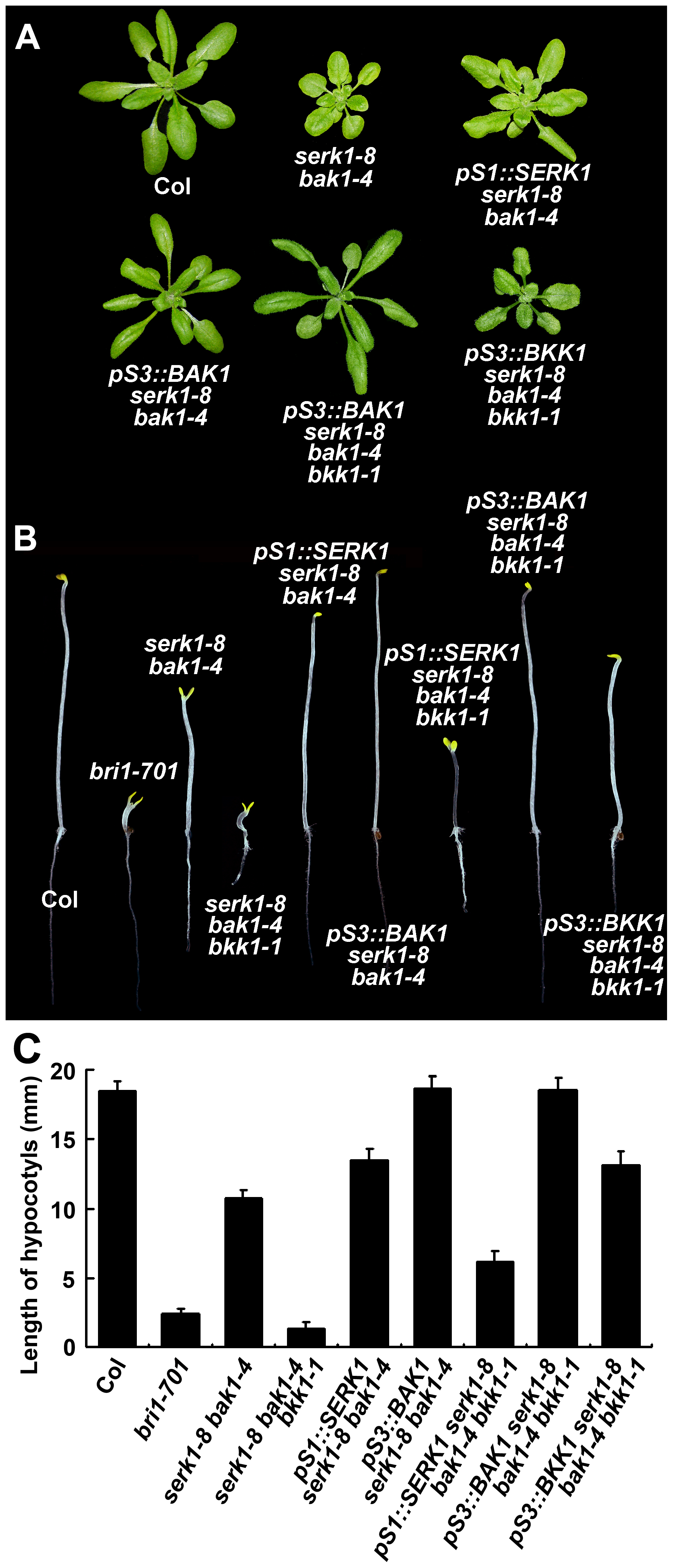 The phenotypes of <i>SERK</i> mutants can be complemented by each of the <i>SERK</i>s.