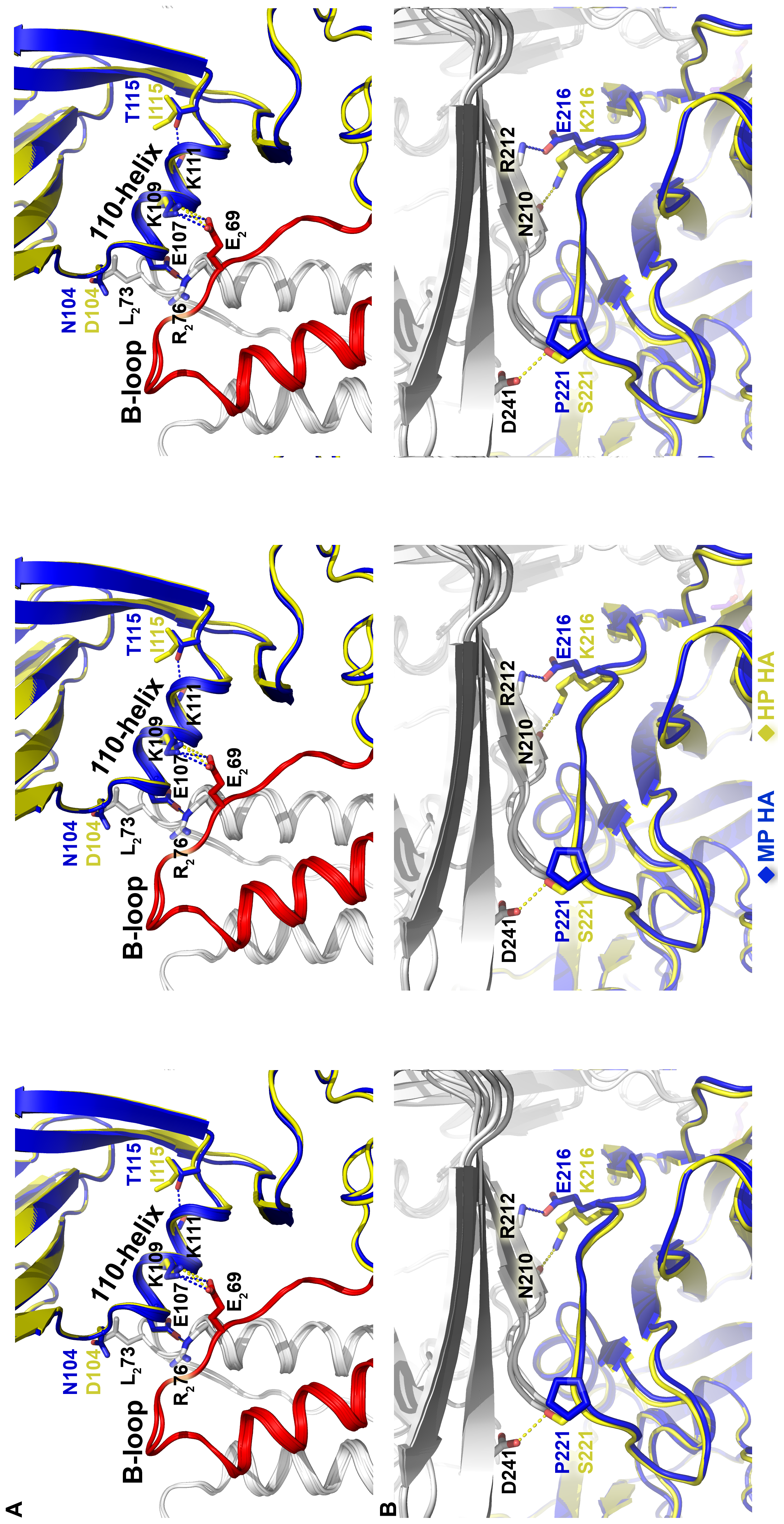 Structures at sites of sequence variation between the MP and HP HA proteins.