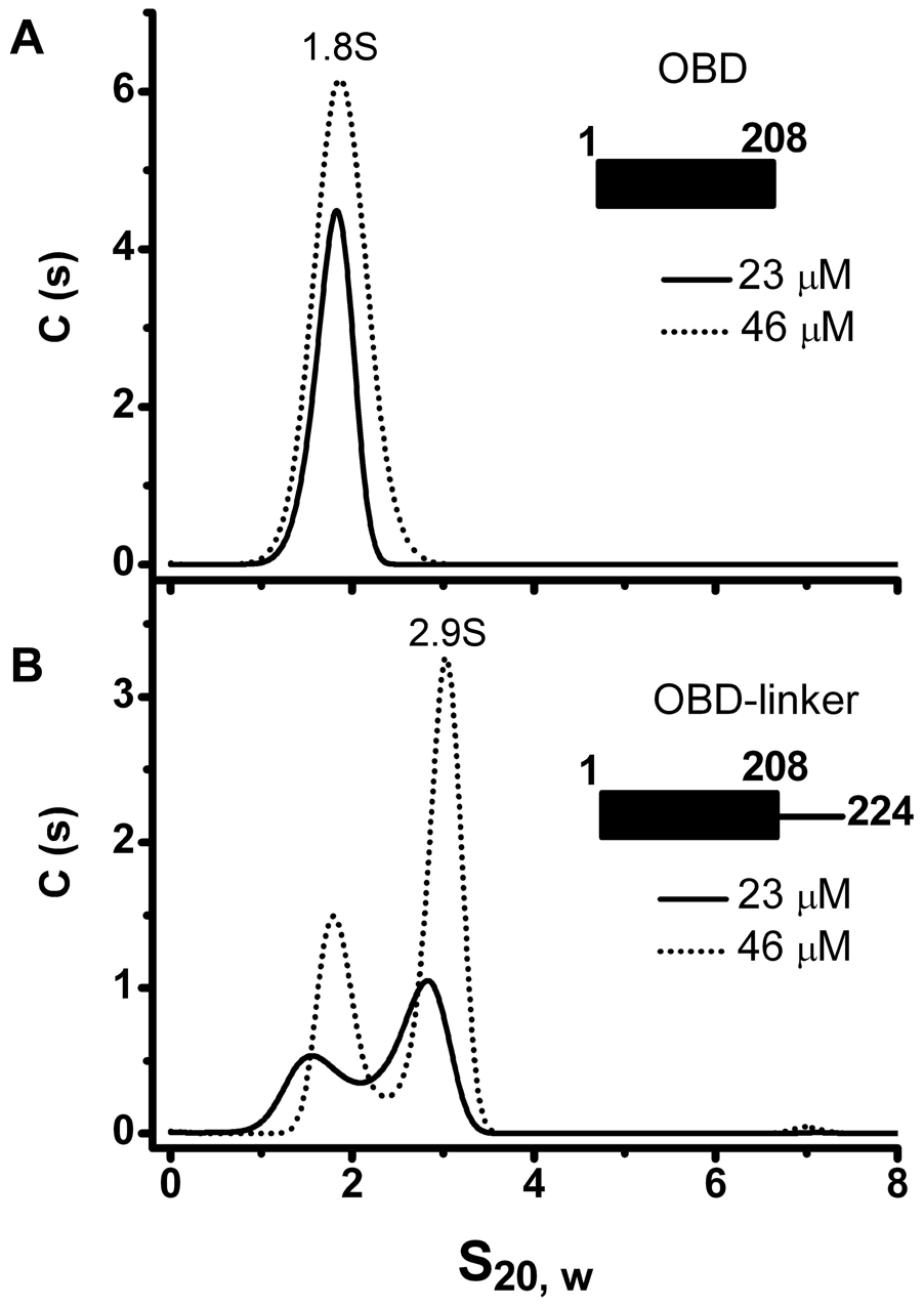 Oligomerization of the OBD domain is induced by the interdomain linker.