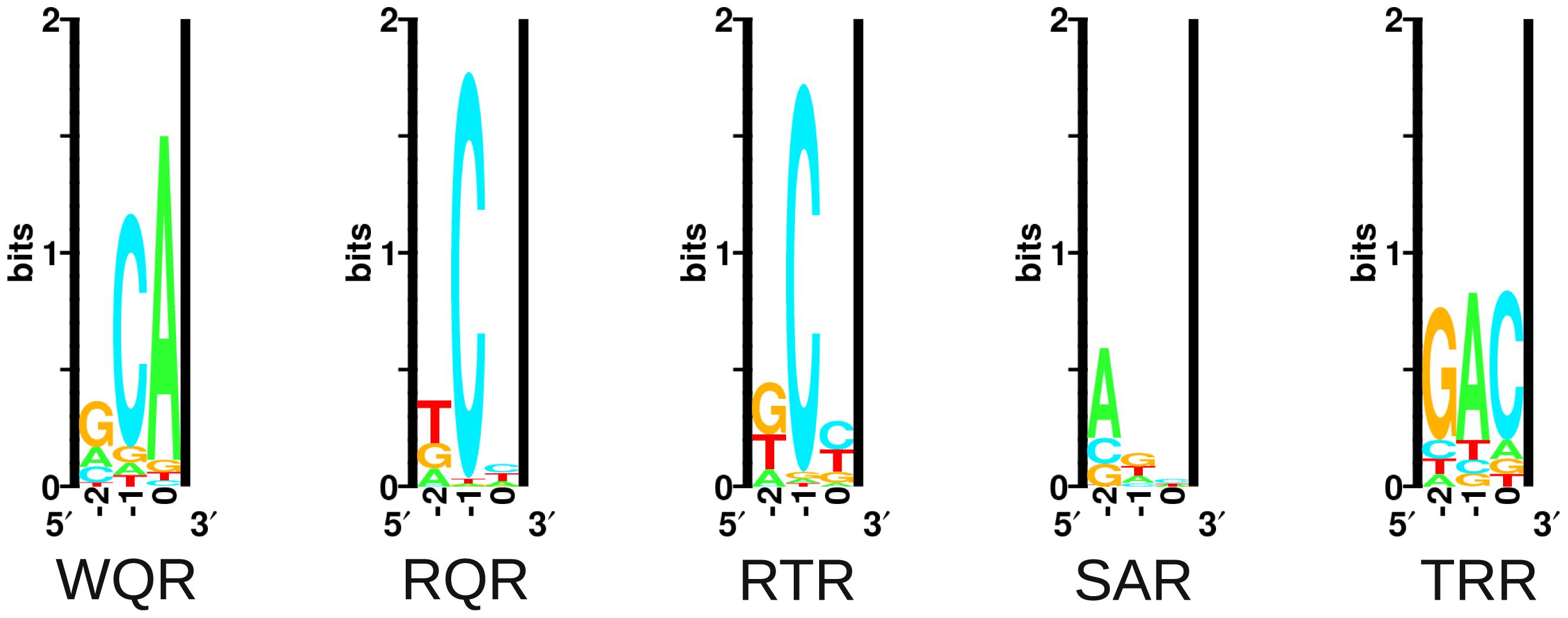 Energy logos for MarA variant binding sites.