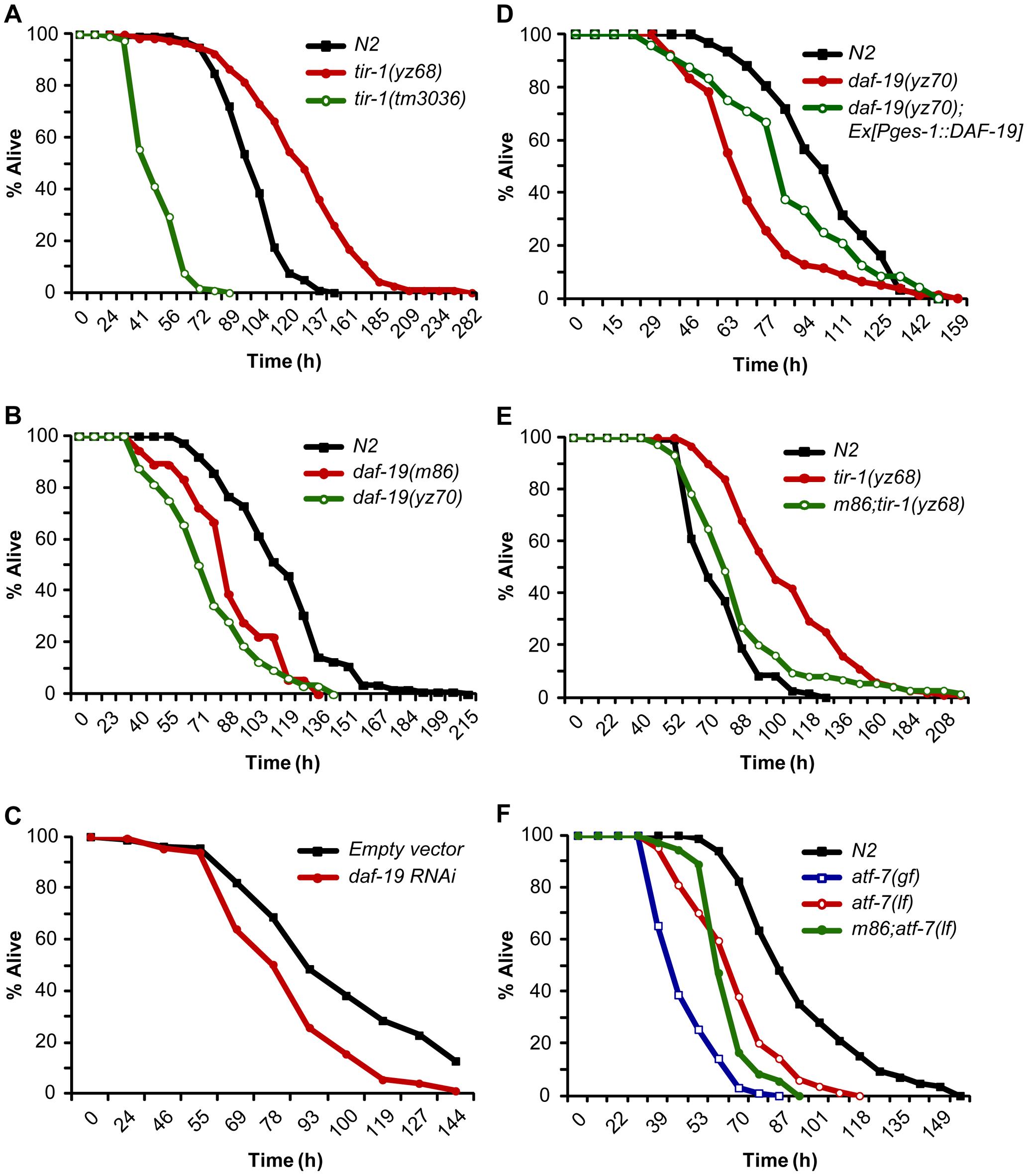 DAF-19 regulation of TIR-1-mediated innate immunity.