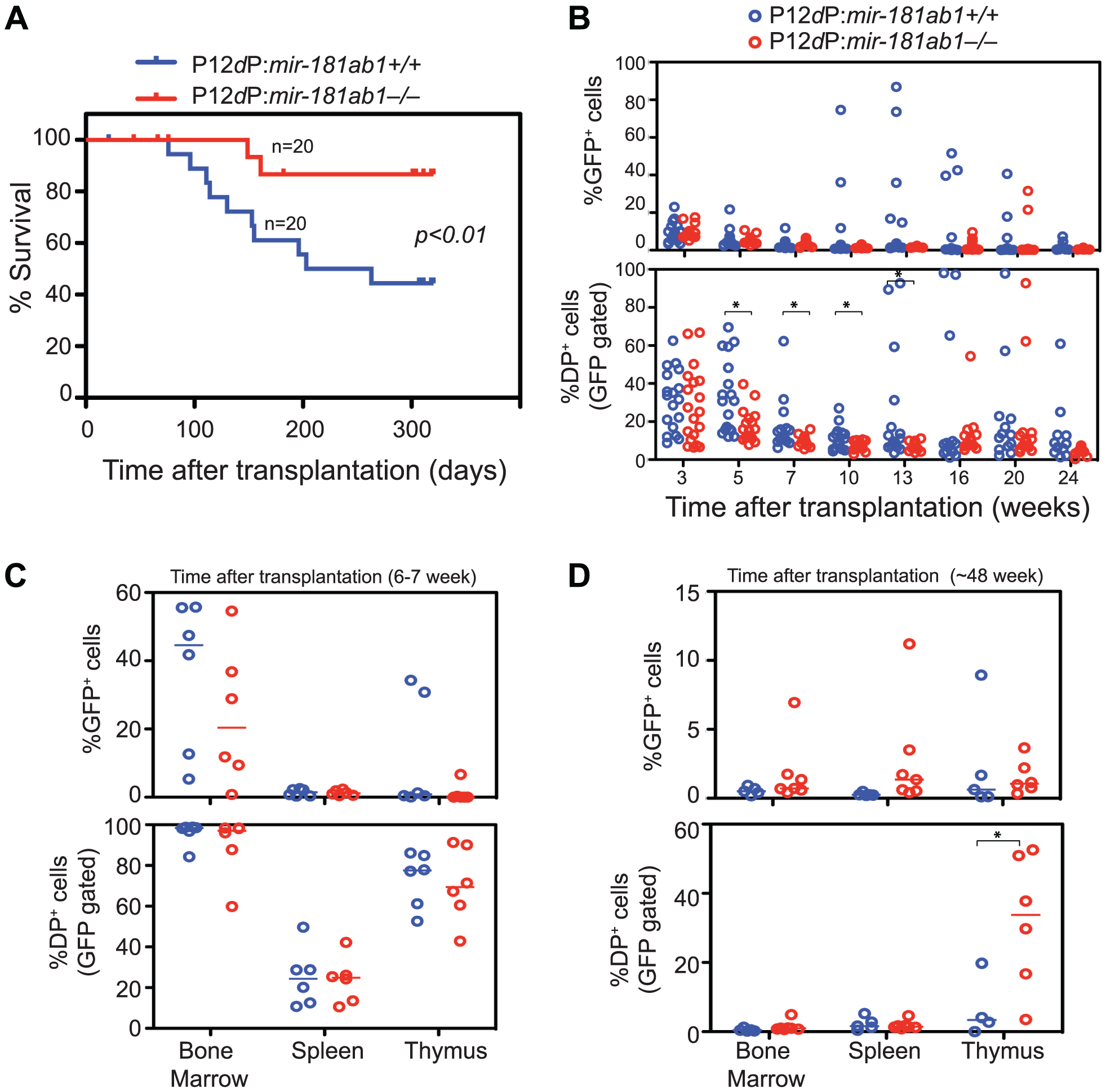 Loss of <i>mir-181ab1</i> inhibits leukemia development induced by the human NOTCH1 mutant P12ΔP.