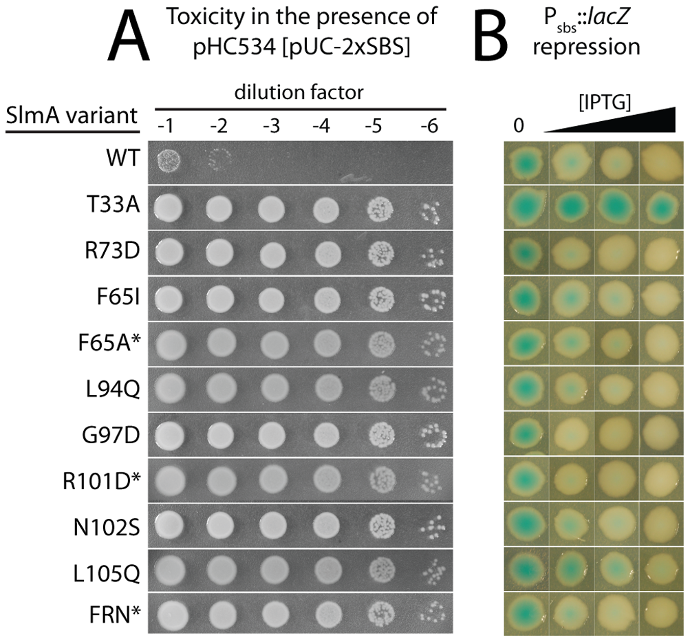 <i>In vivo</i> assays for assessing the toxicity and DNA-binding activity of SlmA variants.