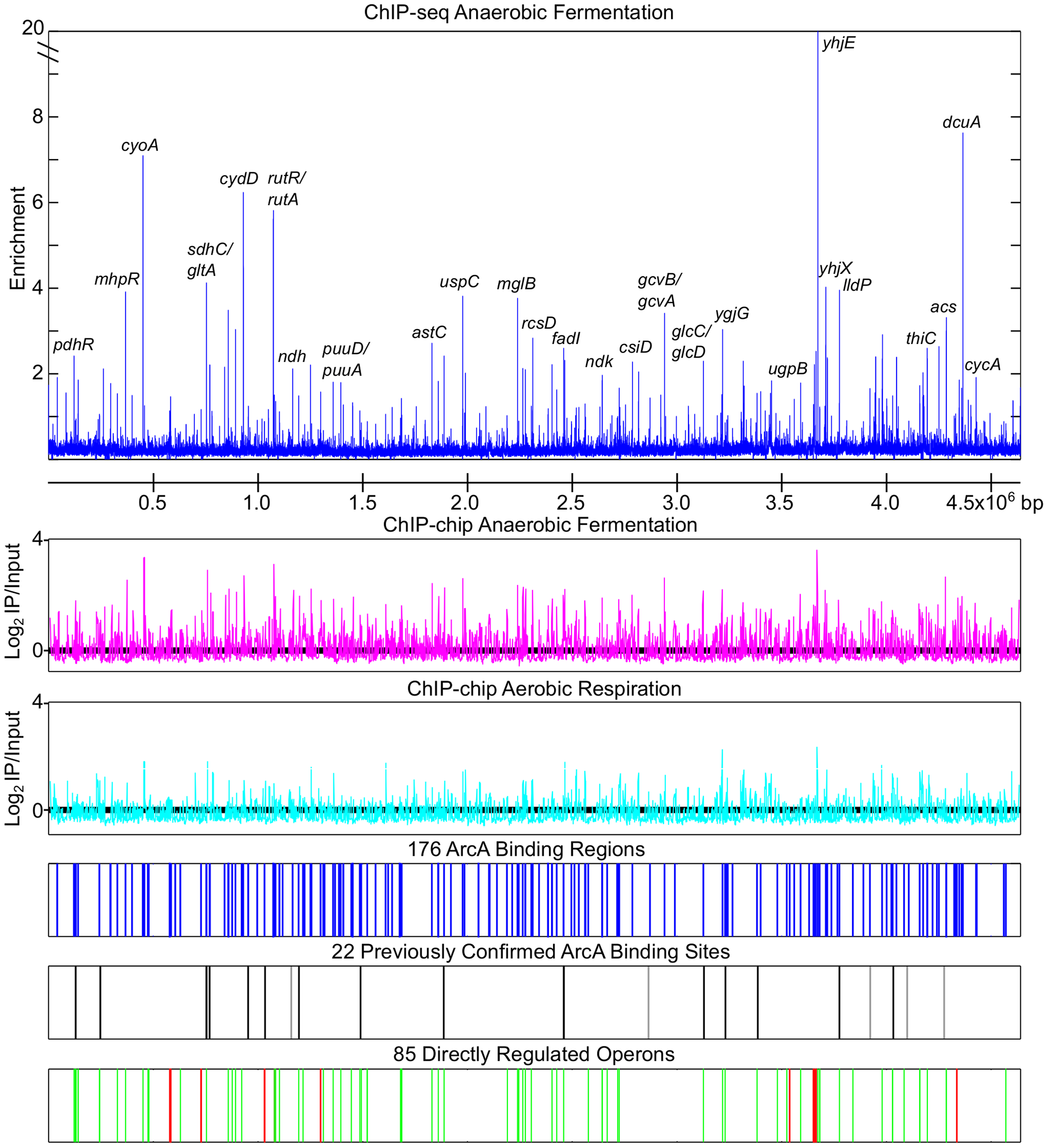Genome wide overview of ArcA regulon analysis.