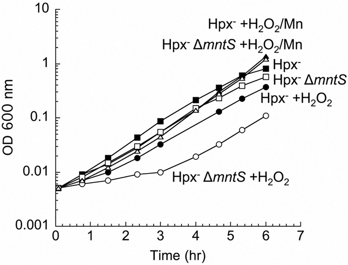 MntS confers resistance to hydrogen peroxide upon manganese limitation.