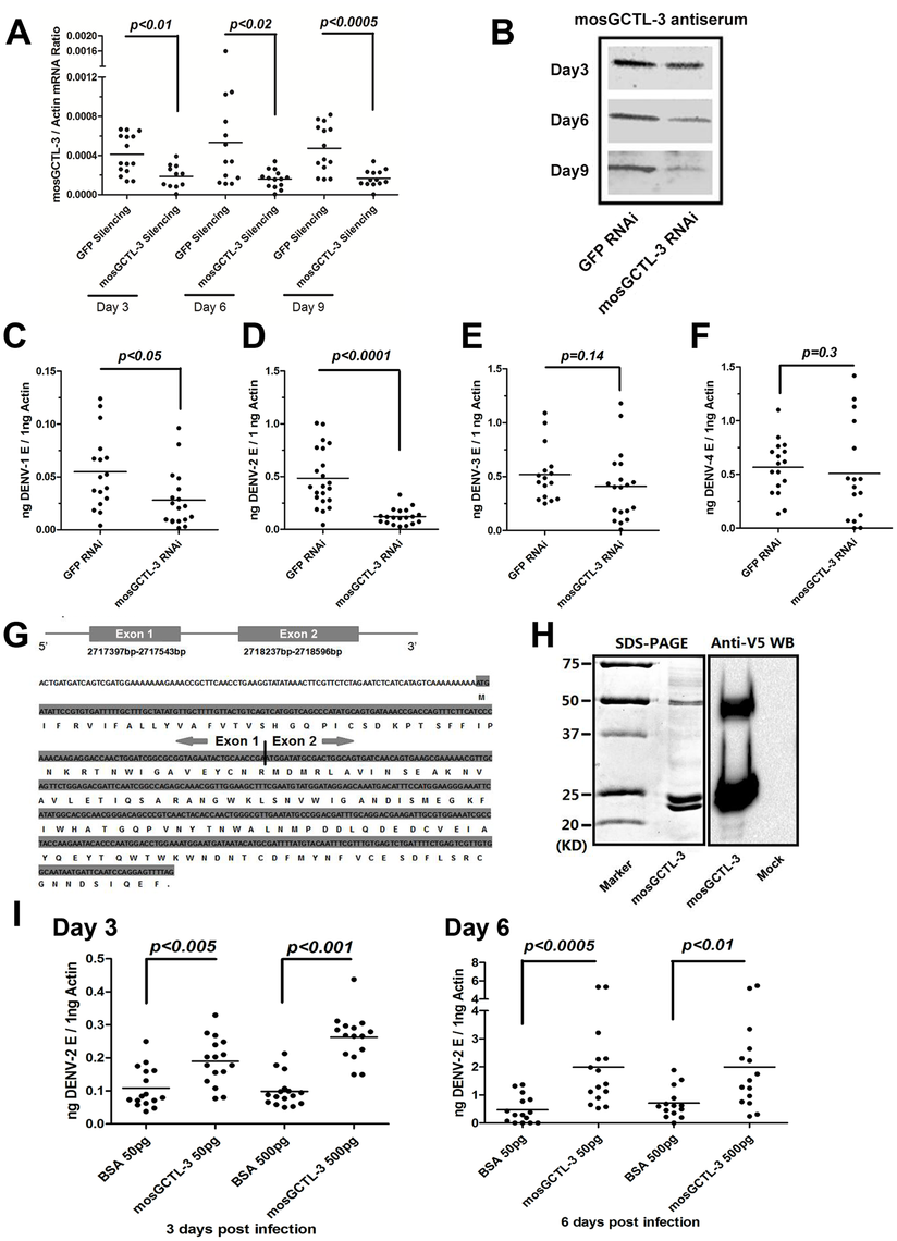 <i>mosGCTL-3</i> facilitated DENV infections.