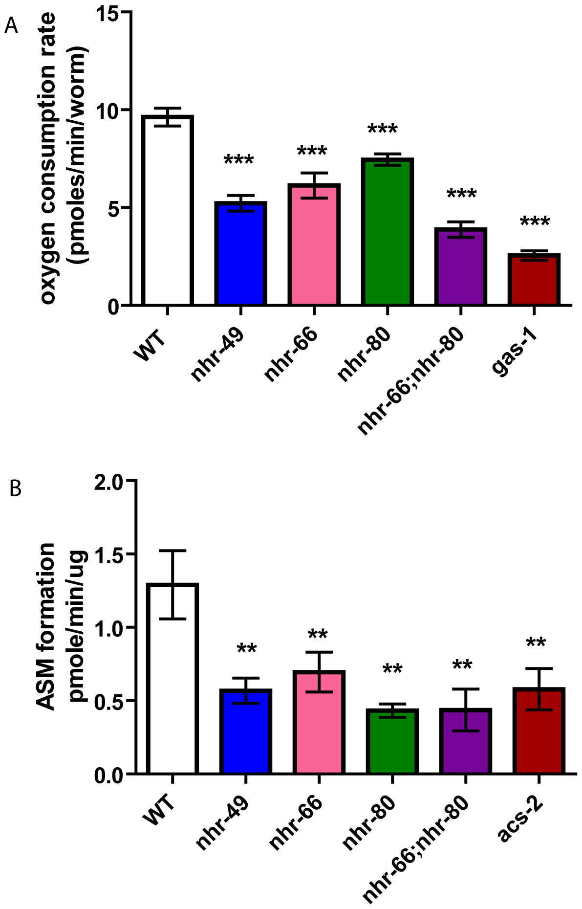 <i>nhr-49</i> animals have reduced basal oxygen consumption rates and reduced beta-oxidation.