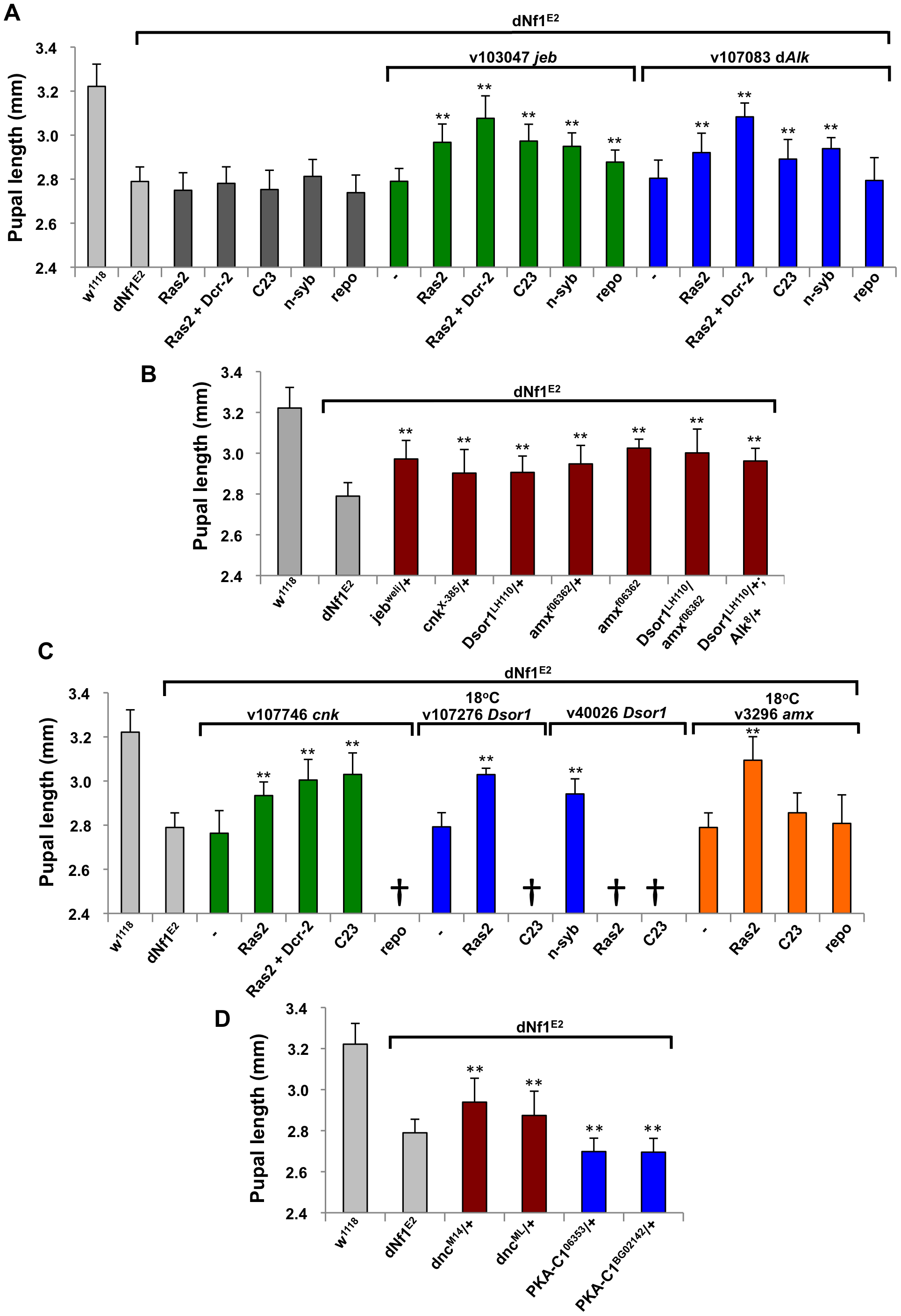 Validation of <i>dNf1</i> modifiers involved in Jeb/dAlk/Ras/ERK and cAMP signaling.