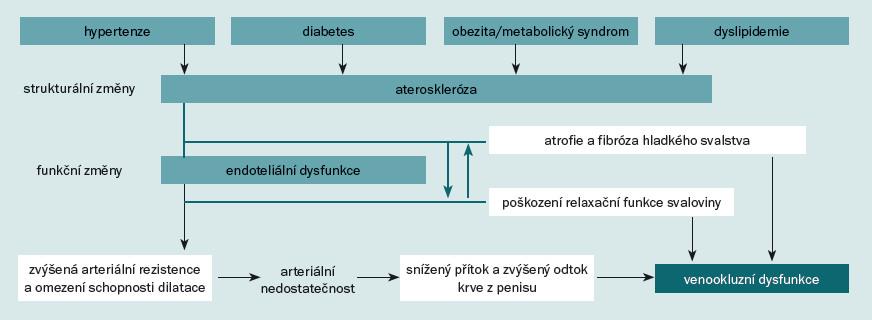 Schéma 2. Patofyziologie ED při kardiovaskulárních onemocněních. Čerpáno a modifikováno dle [26].