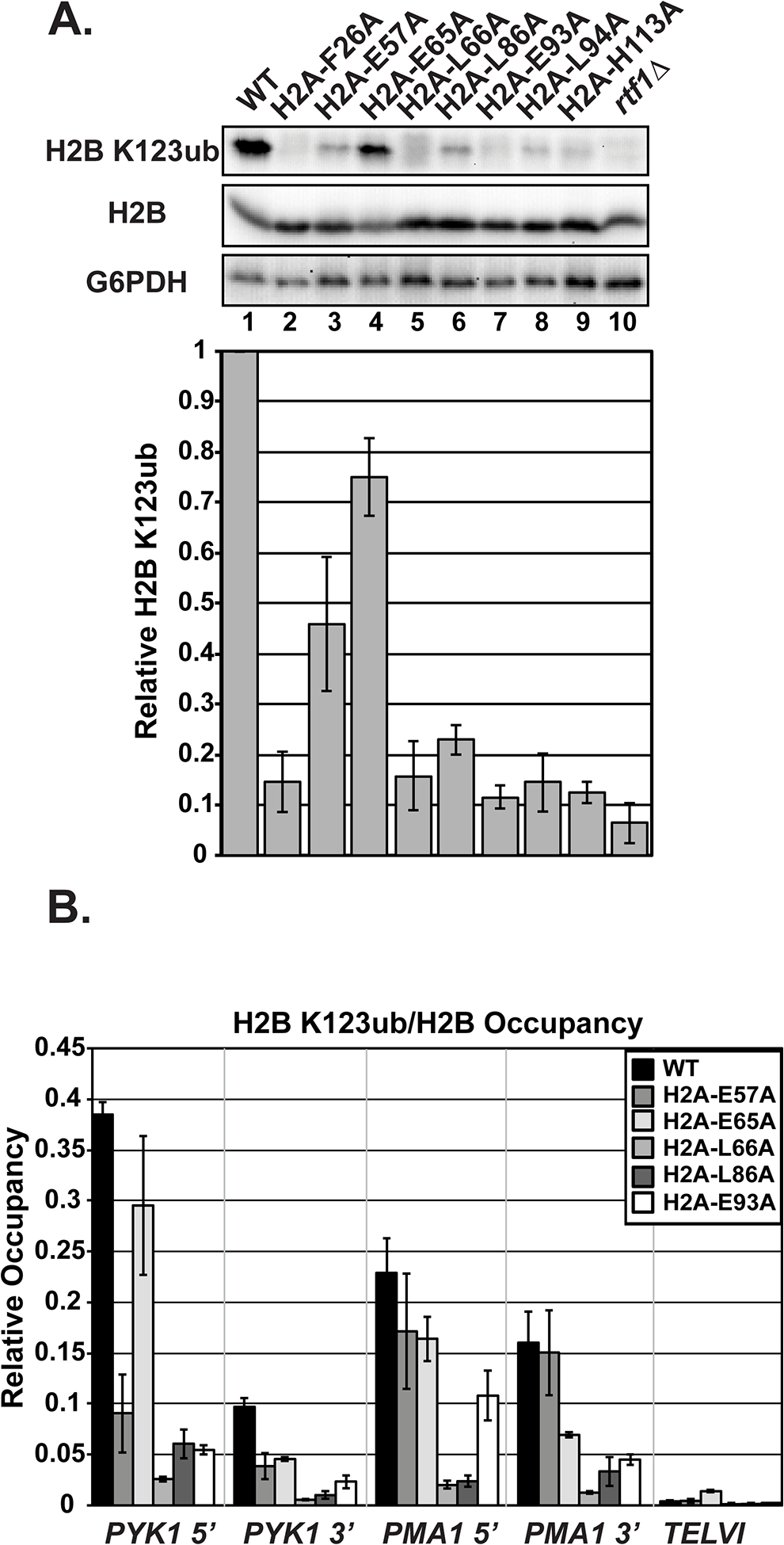 Substitutions in H2A cause H2B K123ub defects.