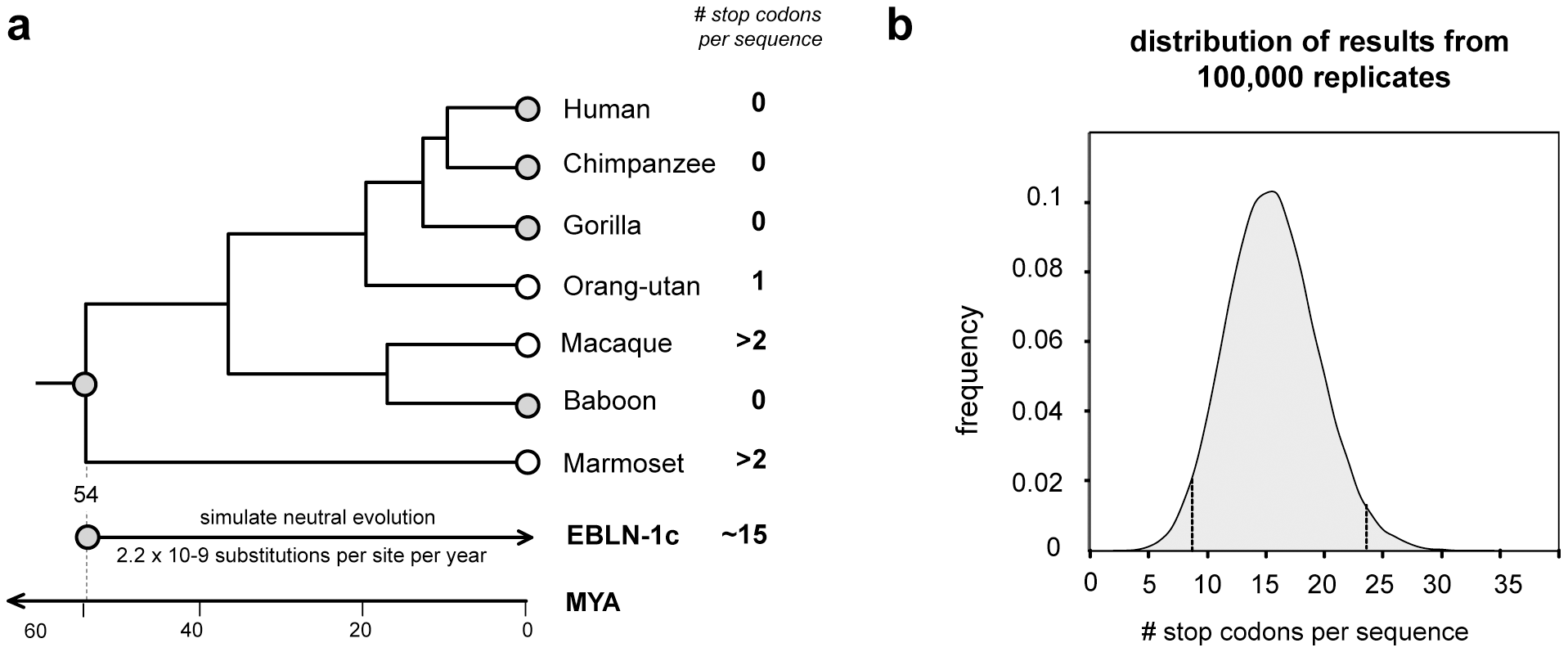 Evolution of EBLN elements in primates.