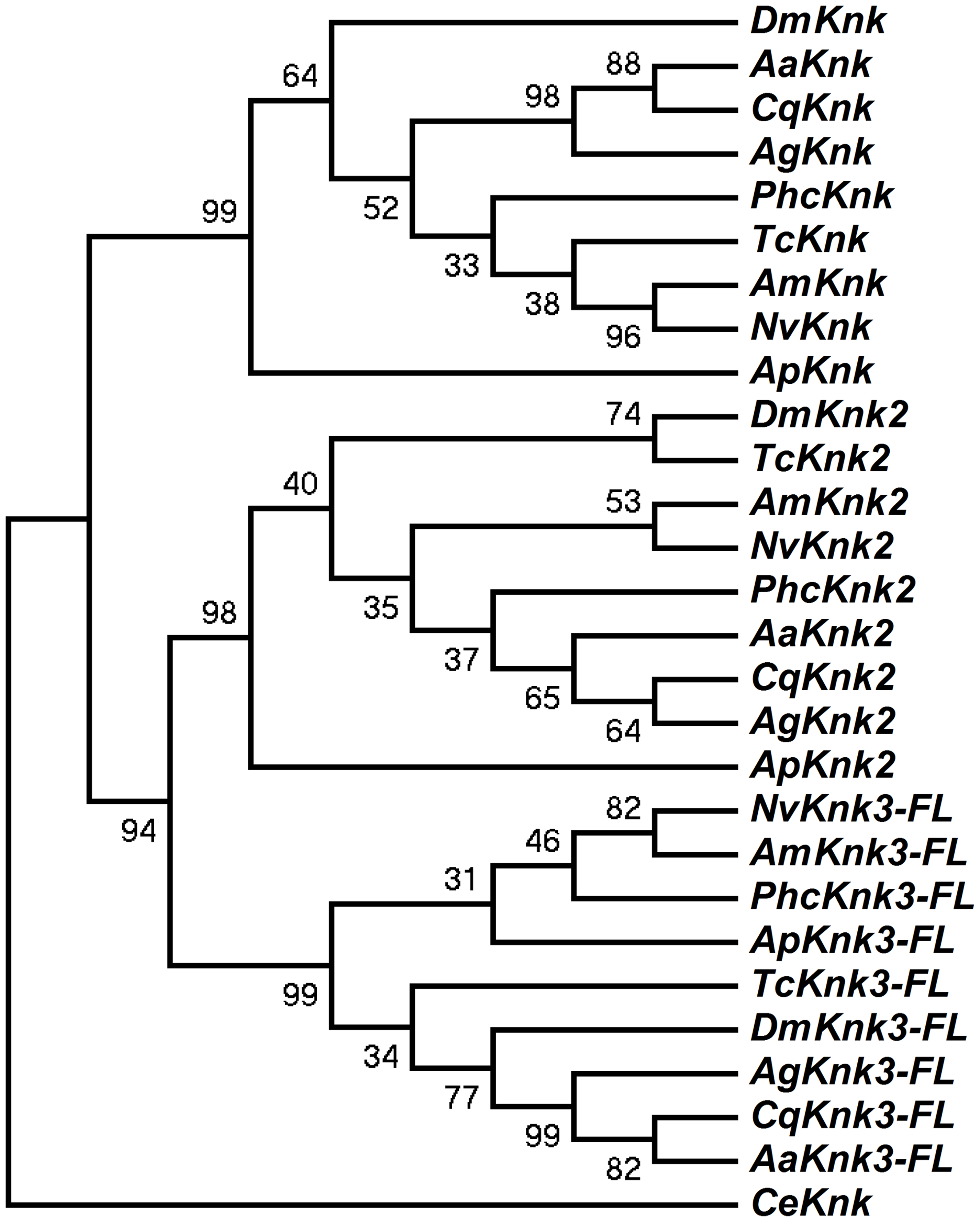 Phylogenetic analysis of insect TcKnk2 and TcKnk3.