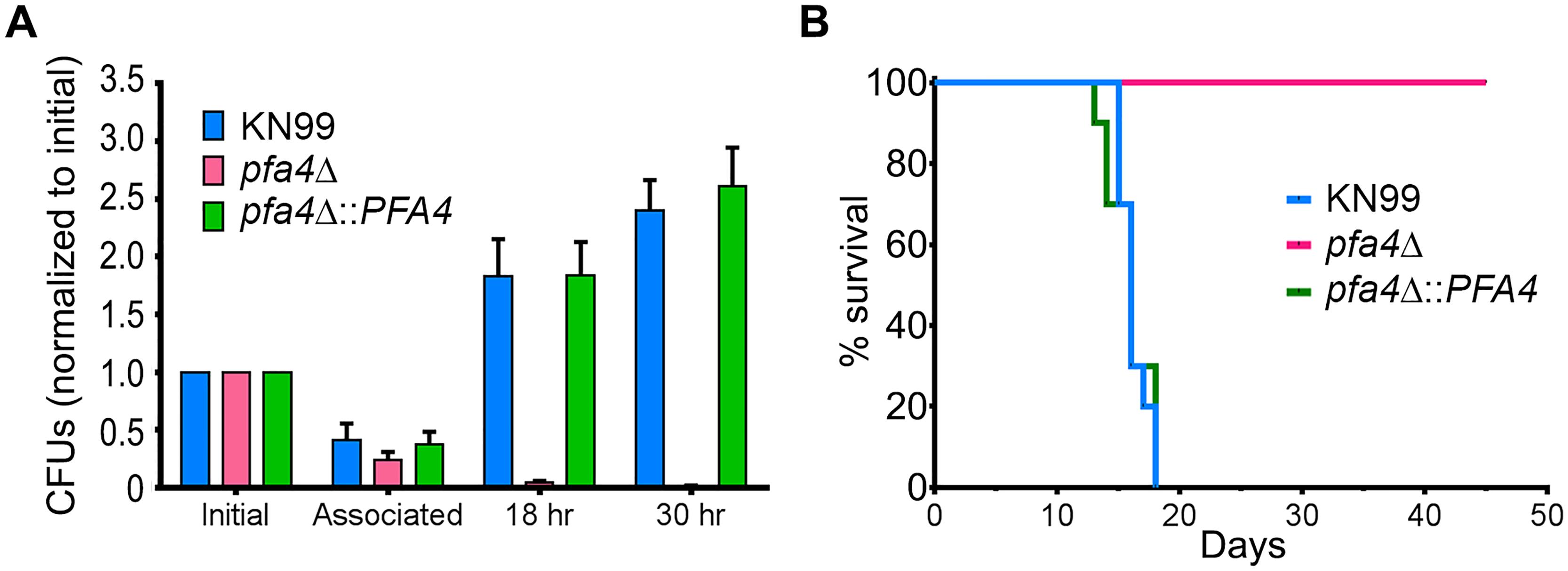 <i>pfa4</i>Δ is avirulent <i>in vitro</i> and <i>in vivo</i>.