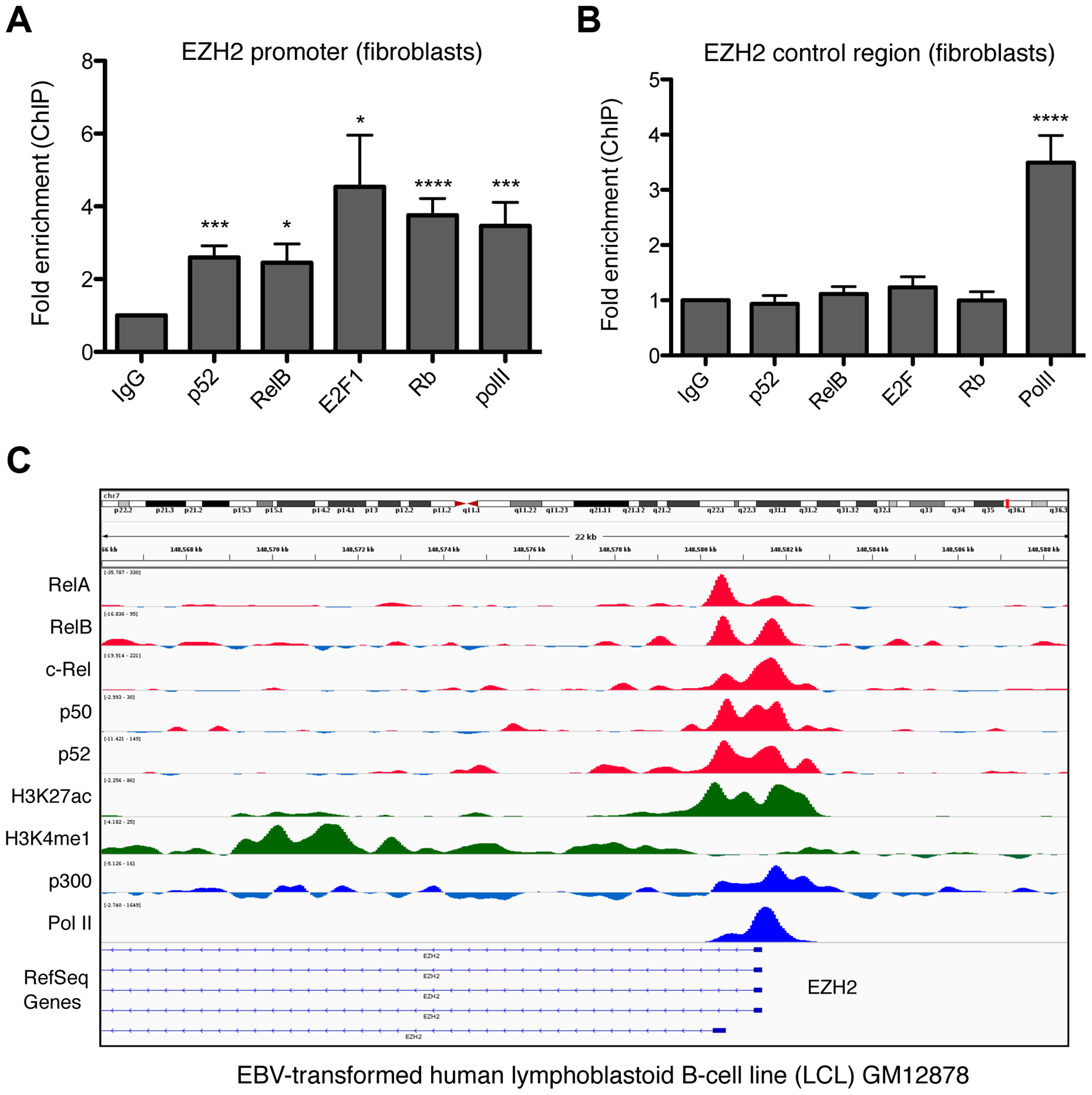 NF-κB subunits bind the EZH2 promoter in fibroblasts and B-cells.