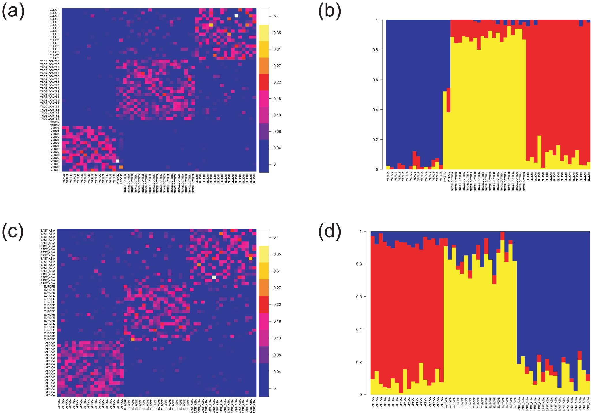 Haplotype-based analyses of population relationships.