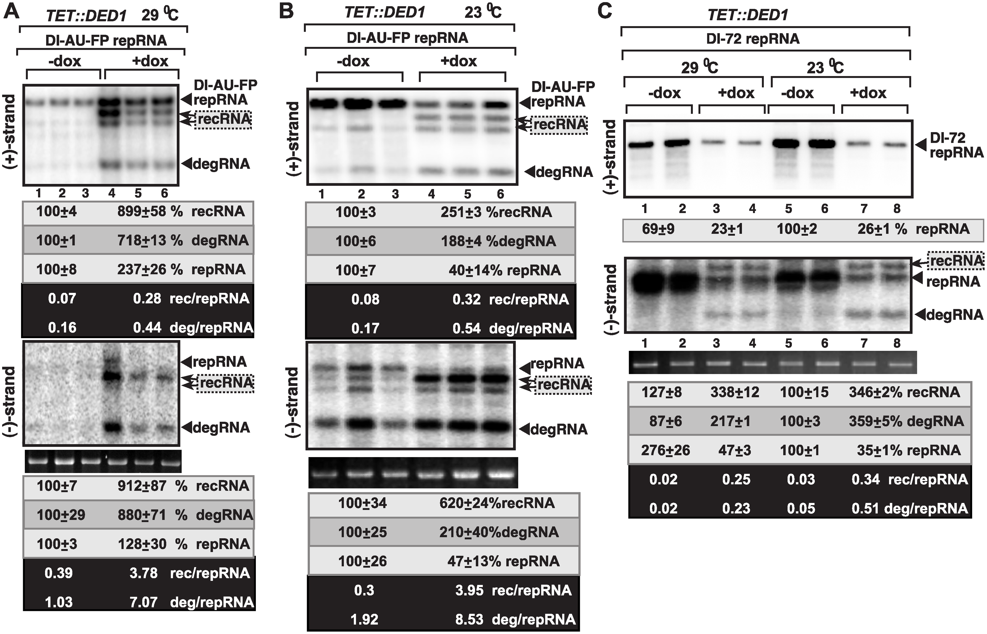 Ded1p depletion leads to increased level of TBSV minus-strand synthesis on recRNAs and degRNAs in yeast.