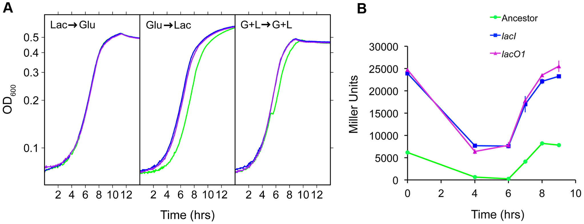 Physiological characterization of <i>lac</i> mutants.