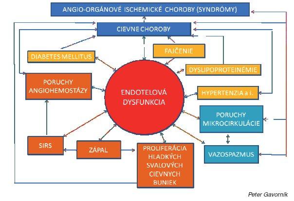 Dysfunkcia endotelu a jej význam v patogenéze artériovej trombózy a iných cievnych chorôb a orgánových ischemických chorôb (Gavorník P., 2002)