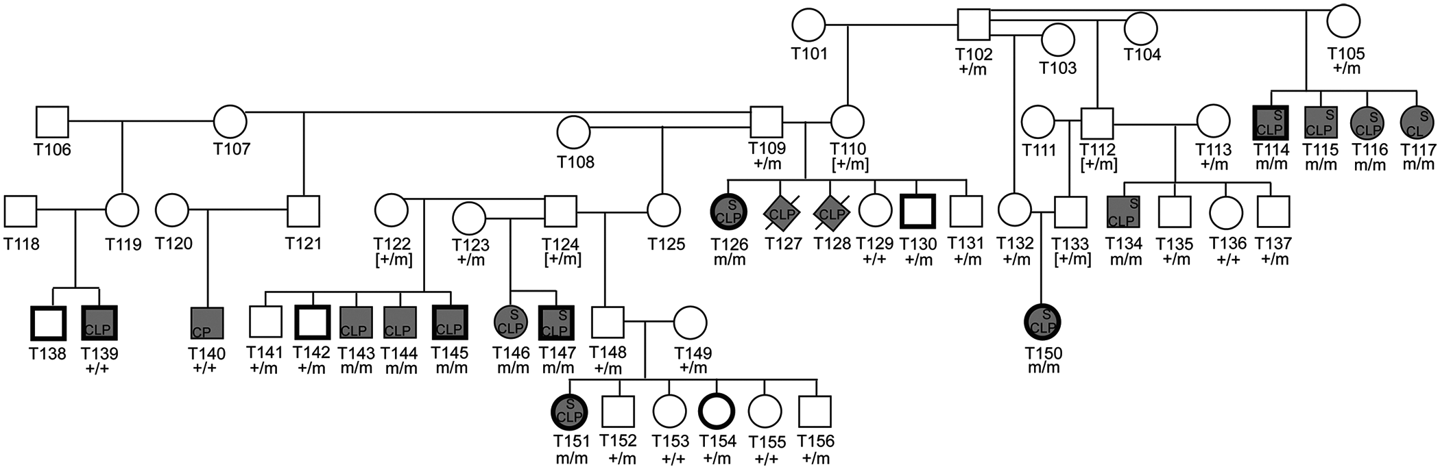 Pedigree of NSDTR families depicting segregation of the phenotype with the <i>ADAMTS20</i> deletion.