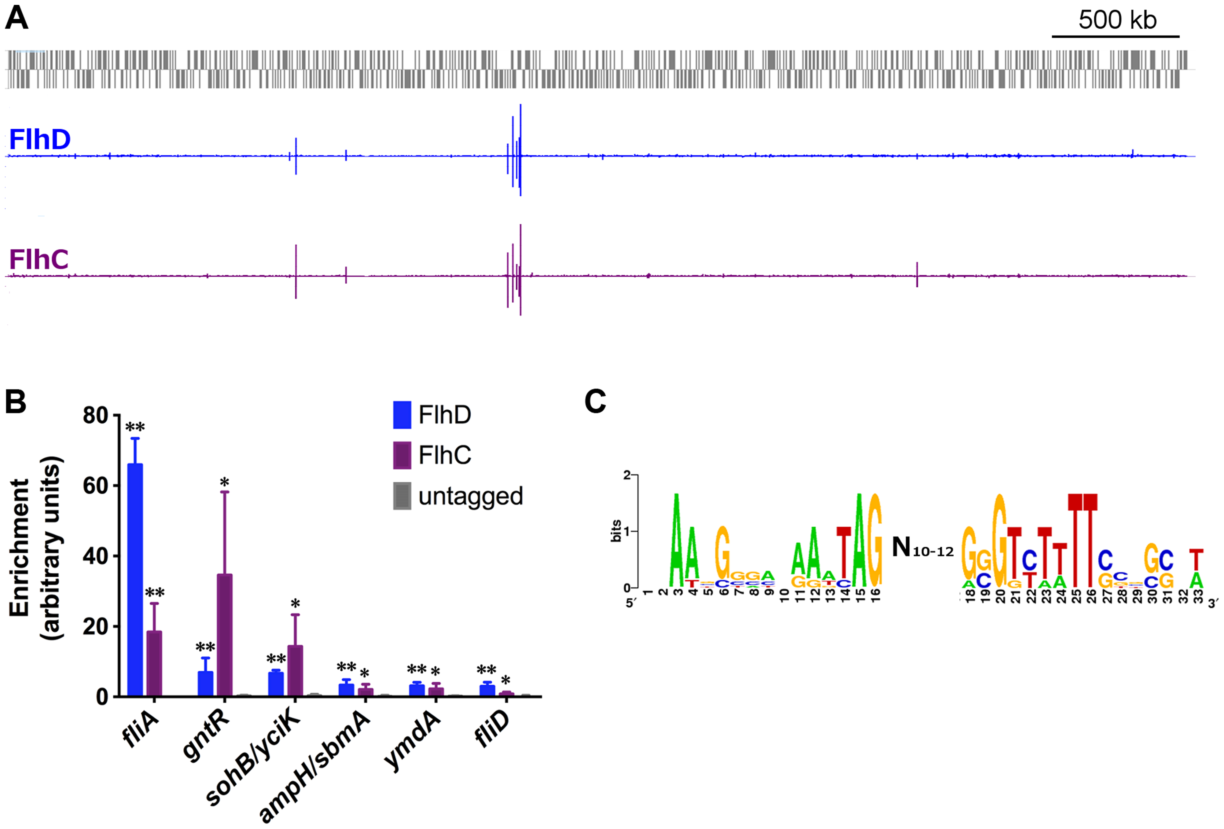 Genome-wide binding of FlhD and FlhC.