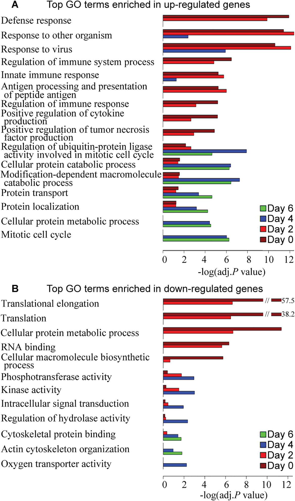 Top GO terms enriched in differentially expressed genes over the course of 6 days after influenza virus infection.